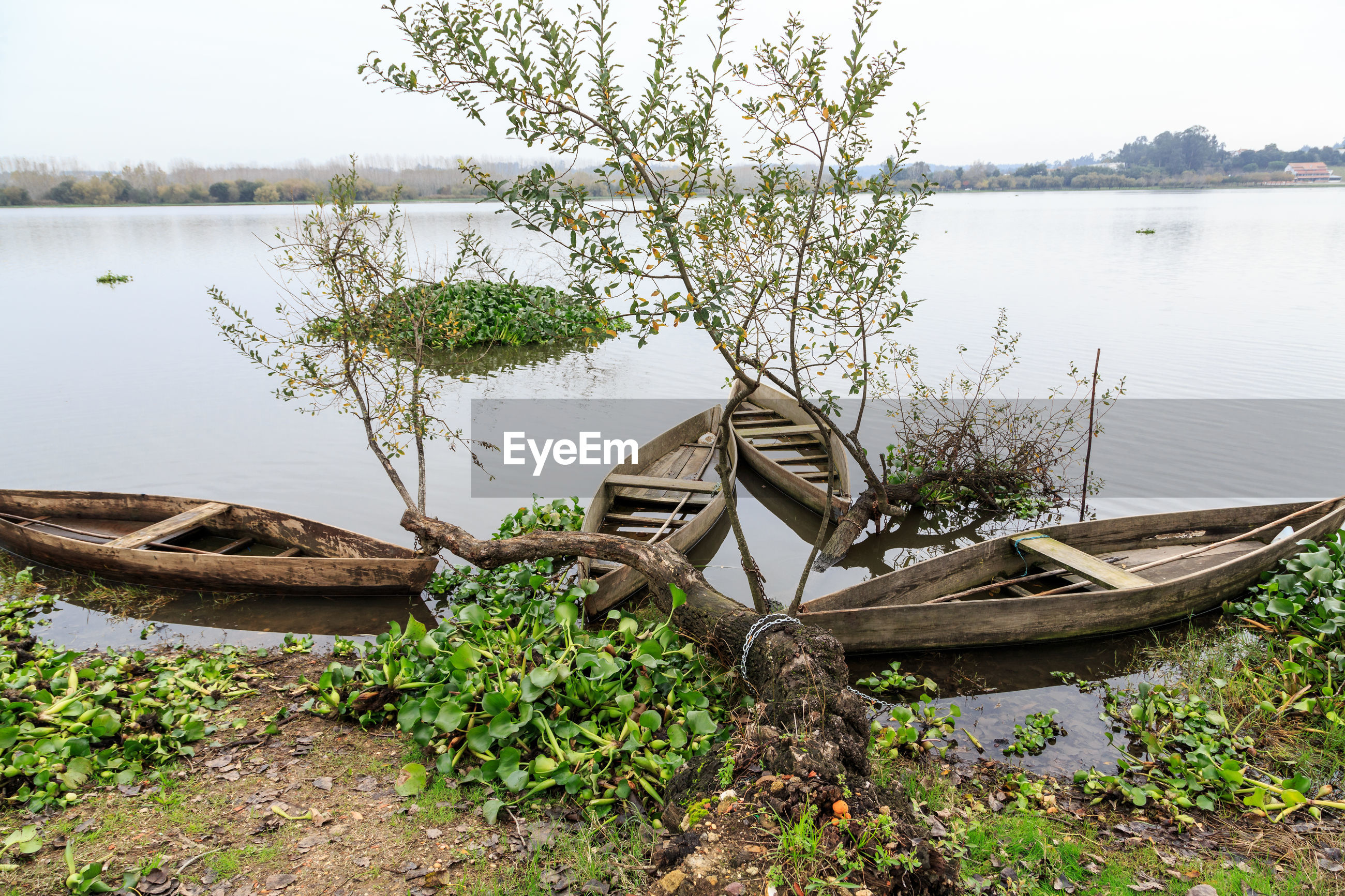 Abandoned boat moored by lake against trees