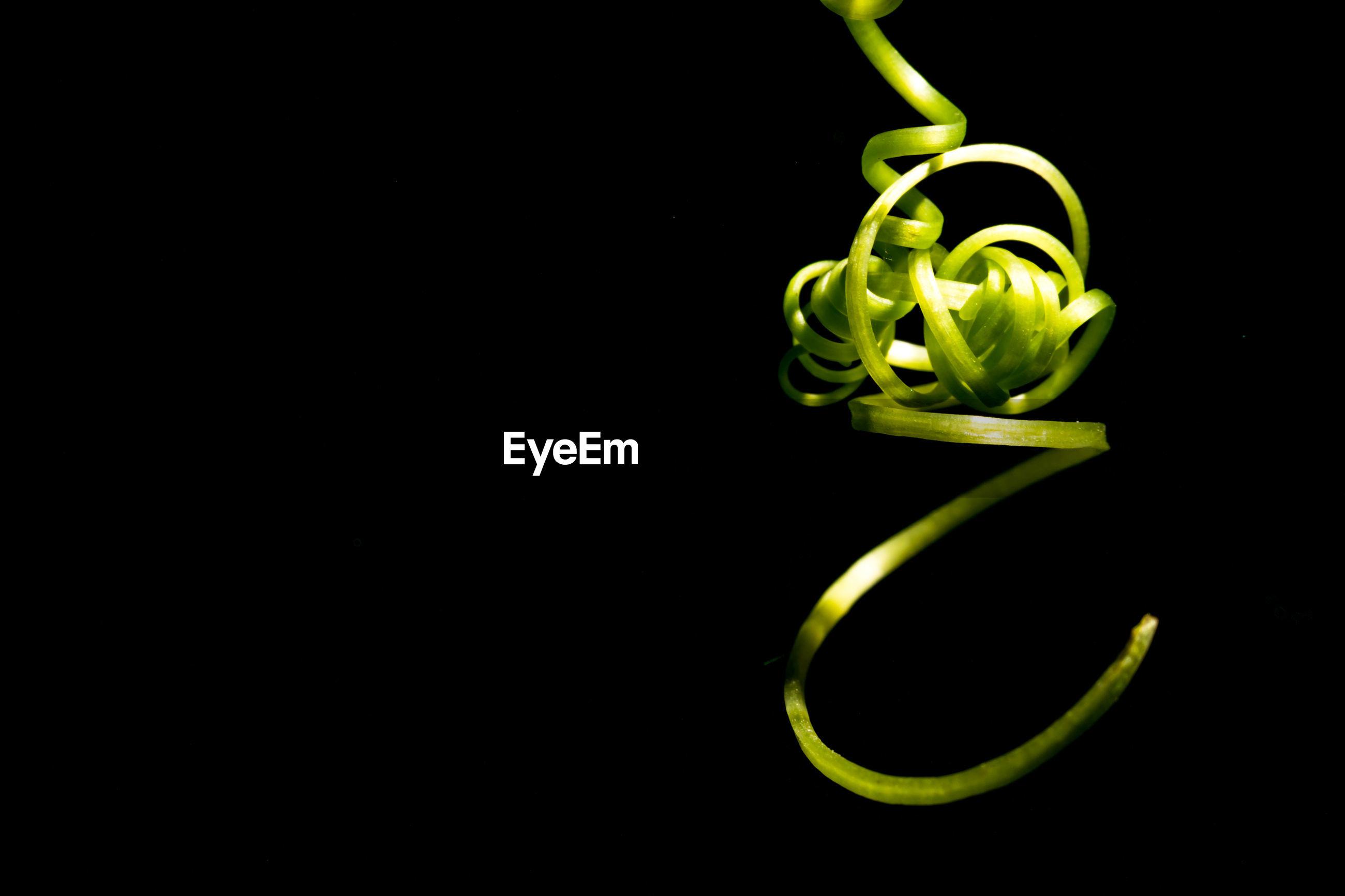 Close-up of vine tendril against black background