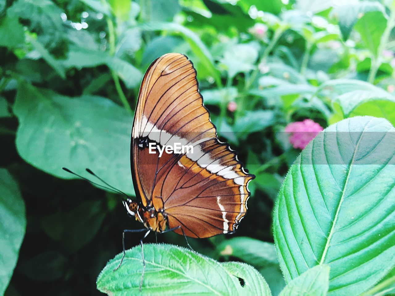 insect, butterfly - insect, invertebrate, animal wing, animal themes, animal wildlife, beauty in nature, one animal, animal, animals in the wild, plant part, leaf, close-up, plant, green color, nature, day, flower, growth, focus on foreground, no people, outdoors, butterfly, pollination