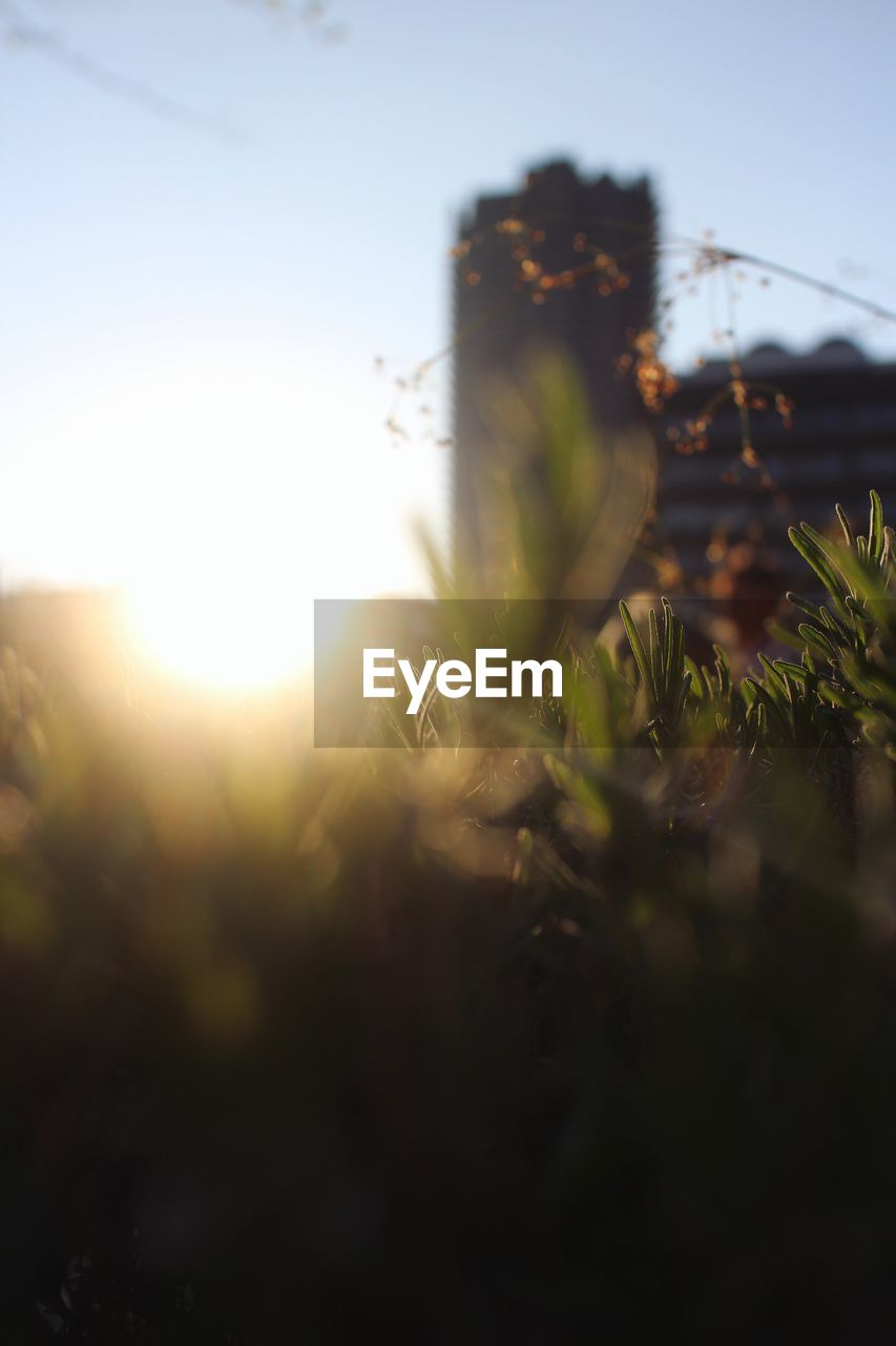 growth, plant, nature, selective focus, no people, fragility, beauty in nature, outdoors, close-up, flower, sky, day, freshness, sunset