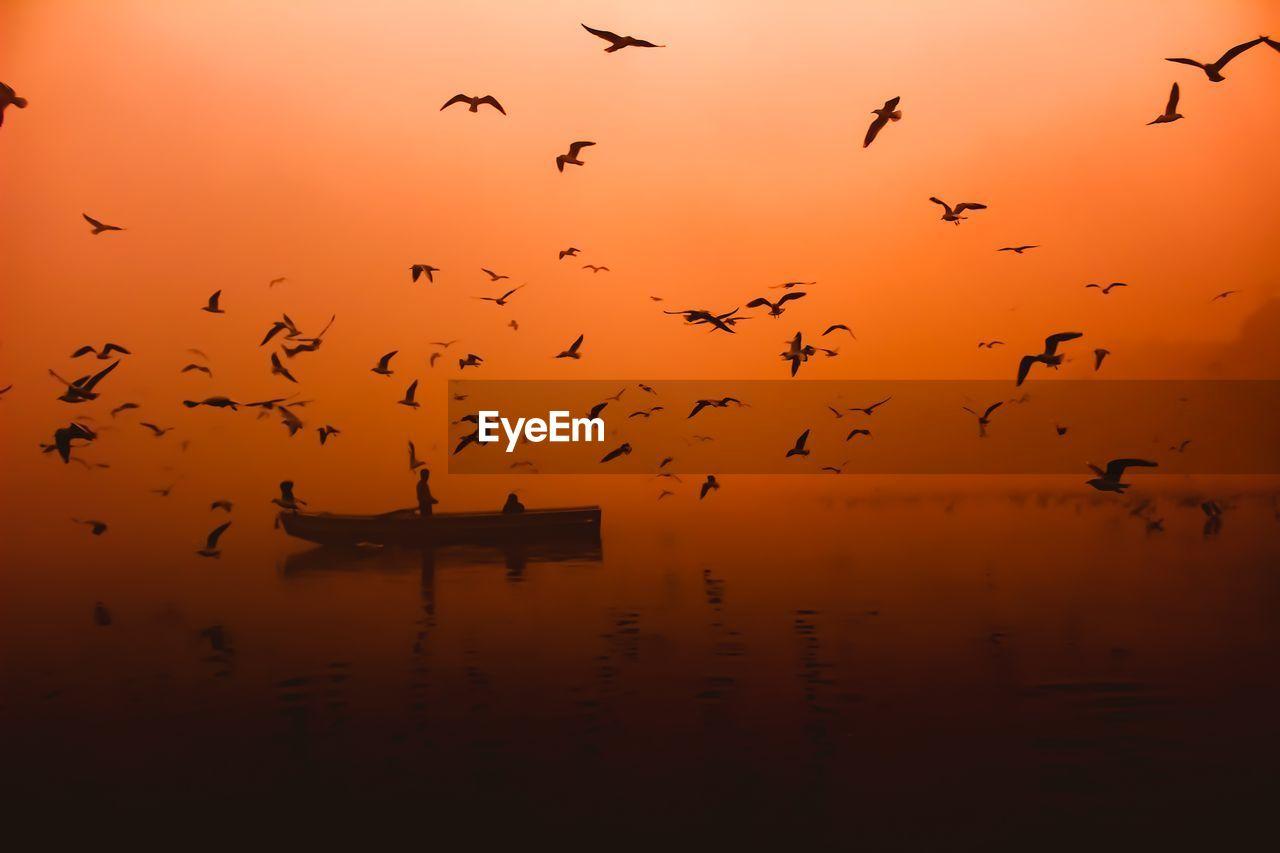 Flock Of Birds Flying Over Boat On Lake Against Orange Sky