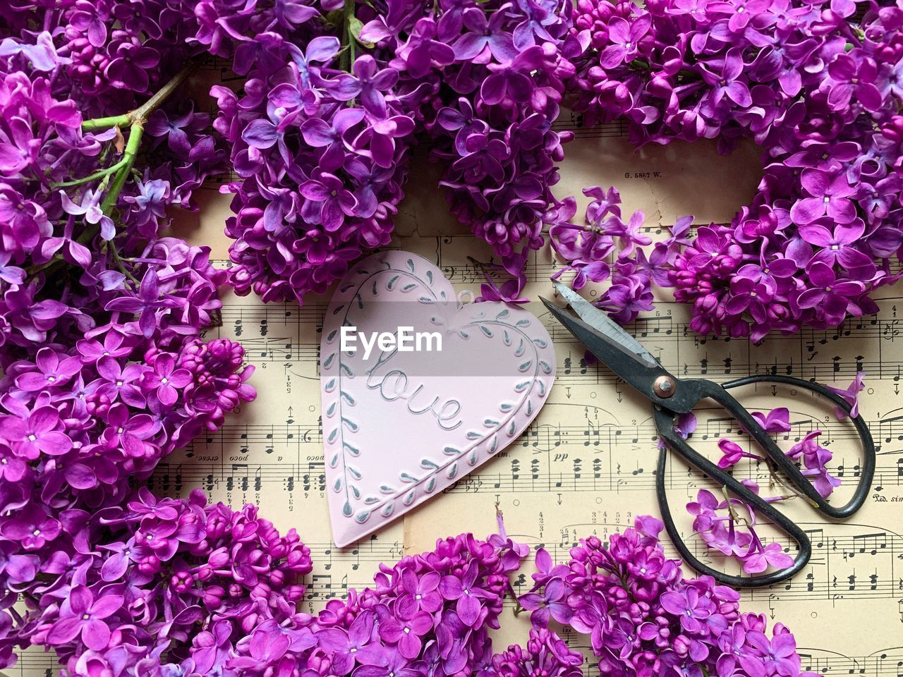flower, flowering plant, no people, plant, purple, close-up, heart shape, high angle view, indoors, freshness, fragility, vulnerability, nature, beauty in nature, pink color, petal, love, still life, table, flower head, positive emotion, springtime, floral pattern, flower arrangement, bouquet