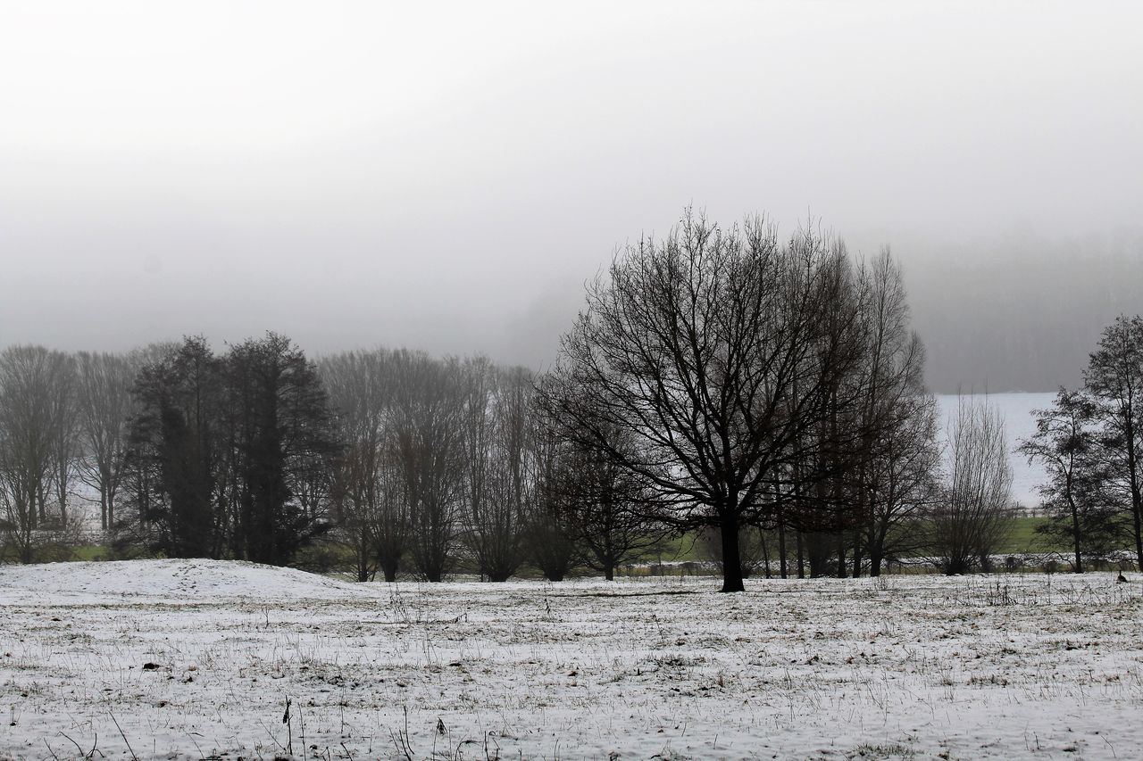 cold temperature, snow, winter, tranquility, nature, tree, weather, tranquil scene, beauty in nature, bare tree, landscape, scenics, day, no people, outdoors, field, clear sky, sky
