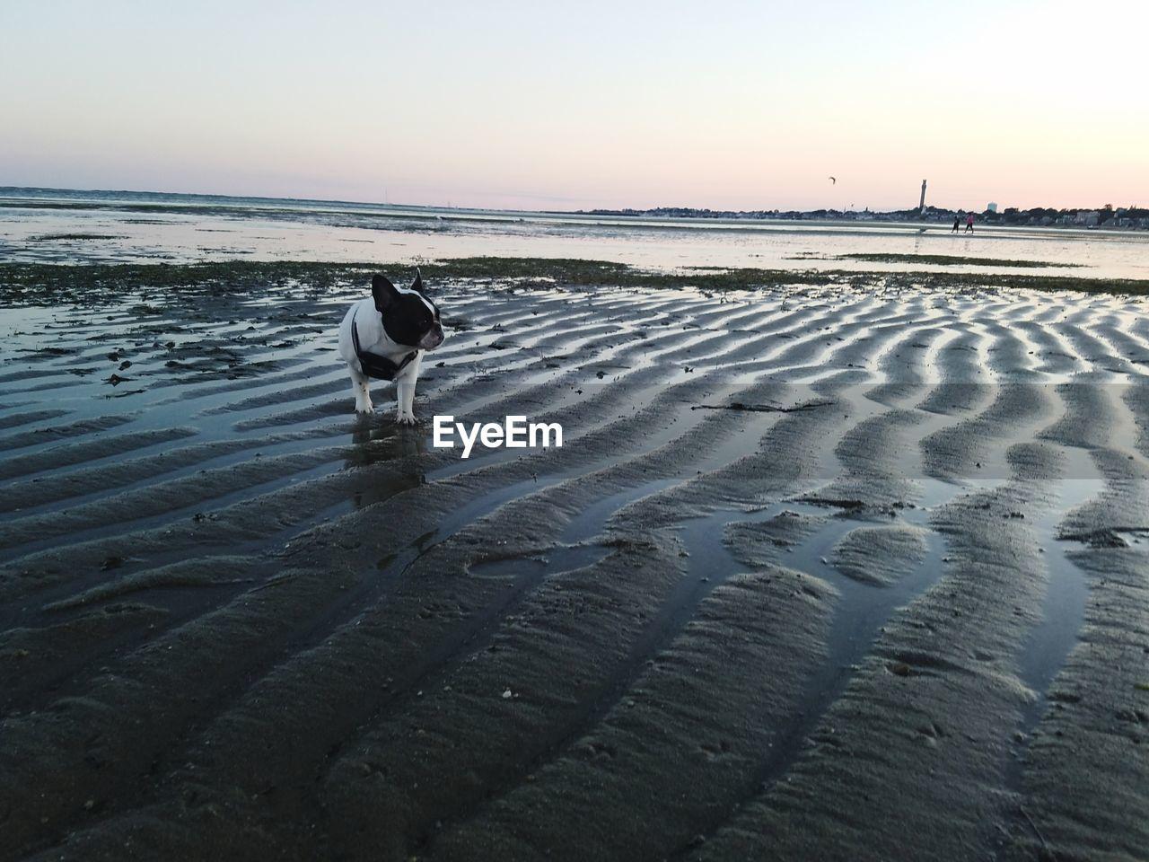 sky, land, beach, sunset, water, animal, beauty in nature, animal themes, one animal, vertebrate, nature, sand, scenics - nature, tranquility, sea, animal wildlife, bird, no people, non-urban scene