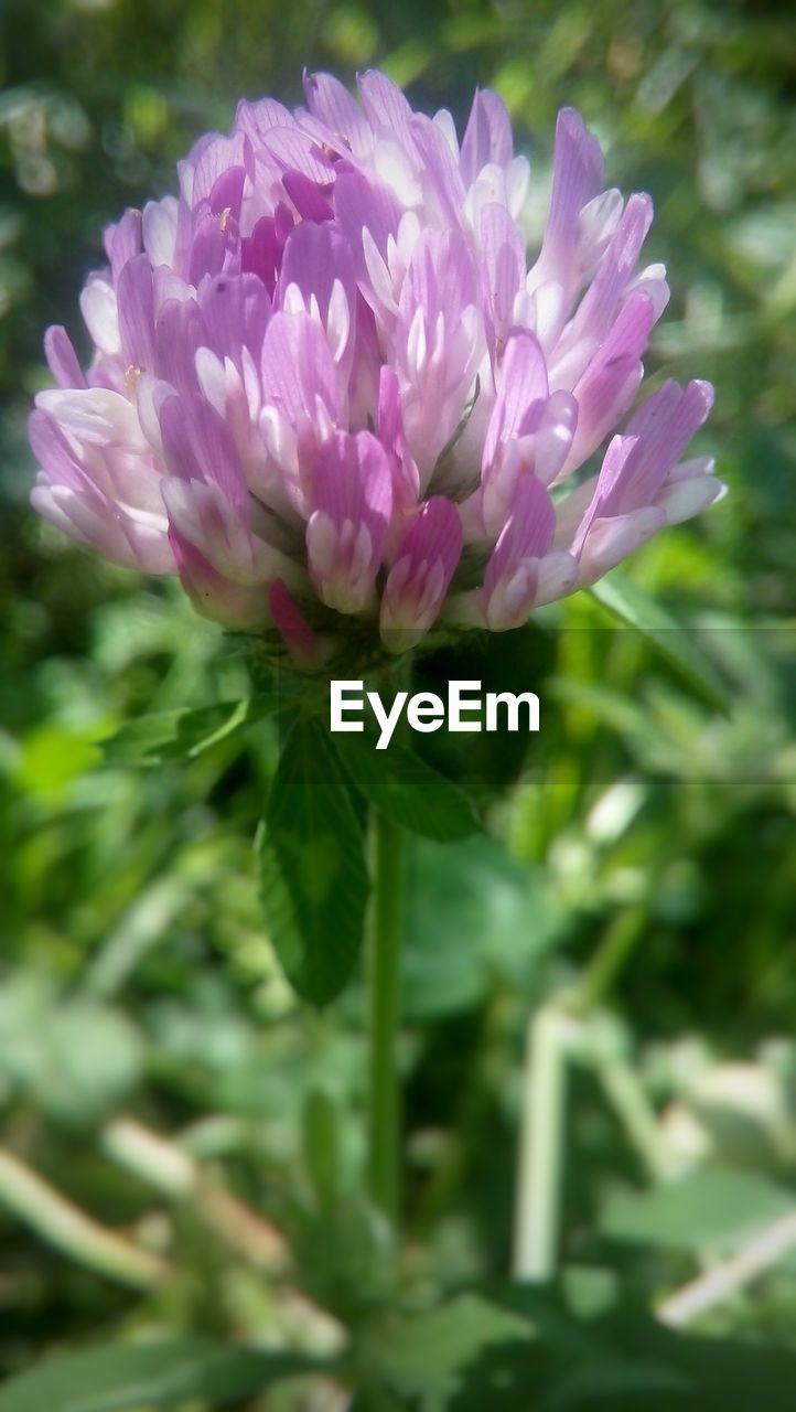 flower, nature, petal, fragility, growth, beauty in nature, plant, no people, freshness, blooming, close-up, outdoors, flower head, day