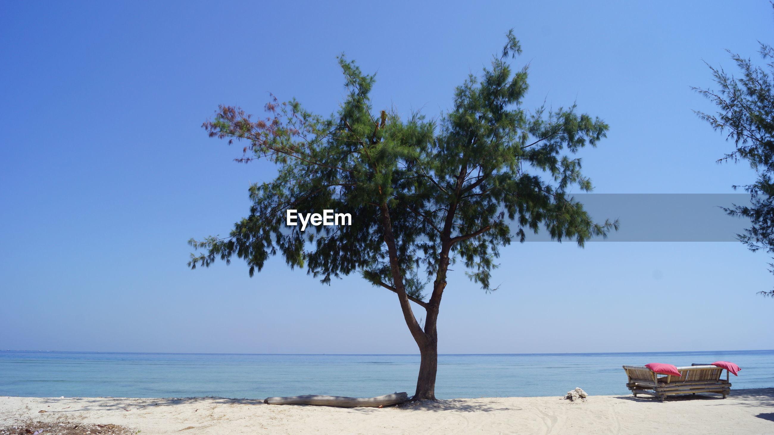 Tree at beach against clear sky on sunny day