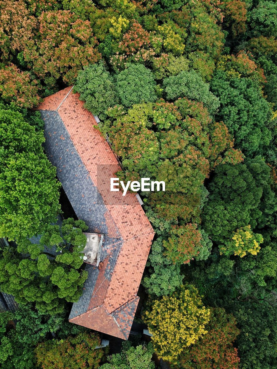 High Angle View Of House Amidst Trees