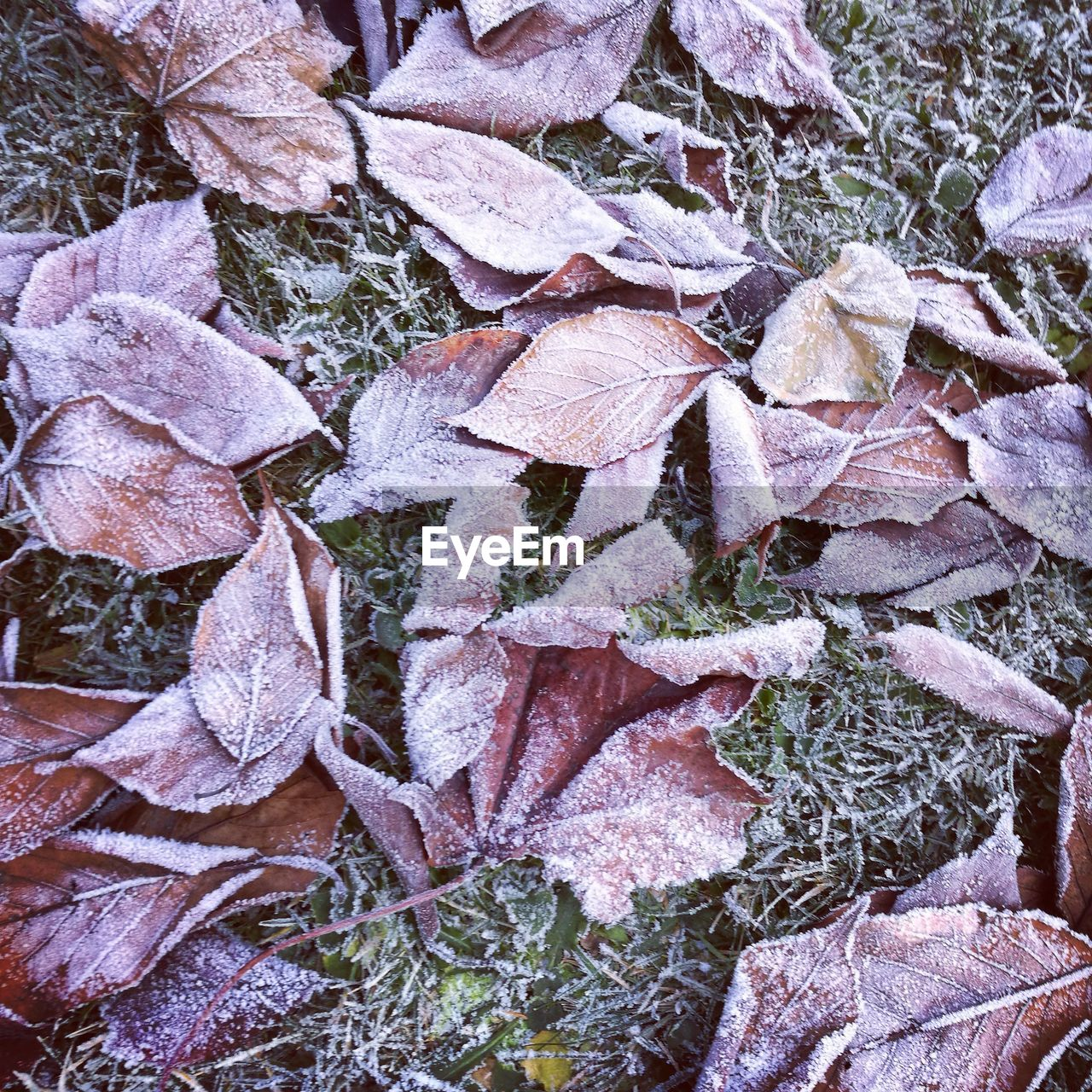 nature, cold temperature, winter, no people, leaf, outdoors, snow, autumn, frozen, full frame, day, plant, beauty in nature, backgrounds, fragility, close-up