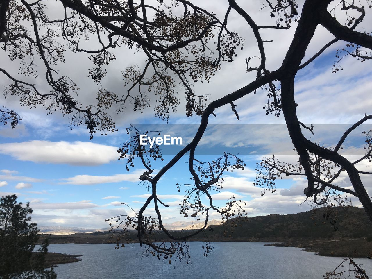 tree, nature, sky, beauty in nature, branch, cloud - sky, tranquility, scenics, tranquil scene, outdoors, no people, growth, lake, day, landscape, low angle view, mountain, water, flower, close-up