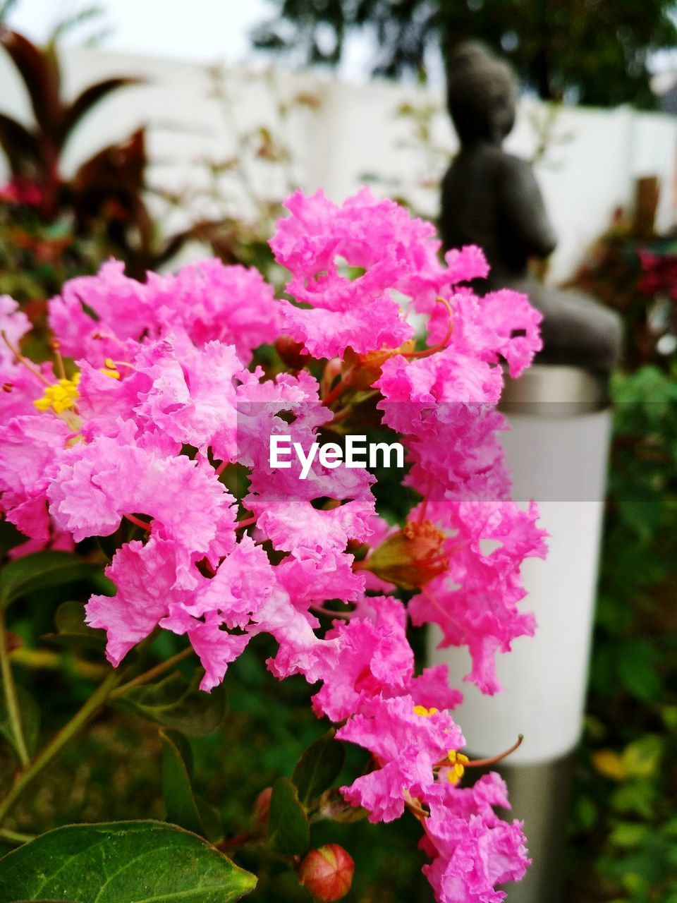 beauty in nature, nature, flower, growth, fragility, pink color, petal, plant, outdoors, focus on foreground, day, close-up, freshness, no people, flower head, leaf, water