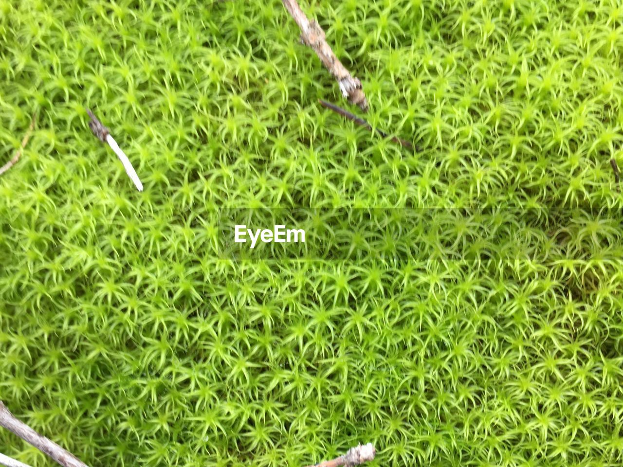 grass, green color, high angle view, animal themes, nature, no people, day, growth, outdoors, plant, food, close-up, freshness