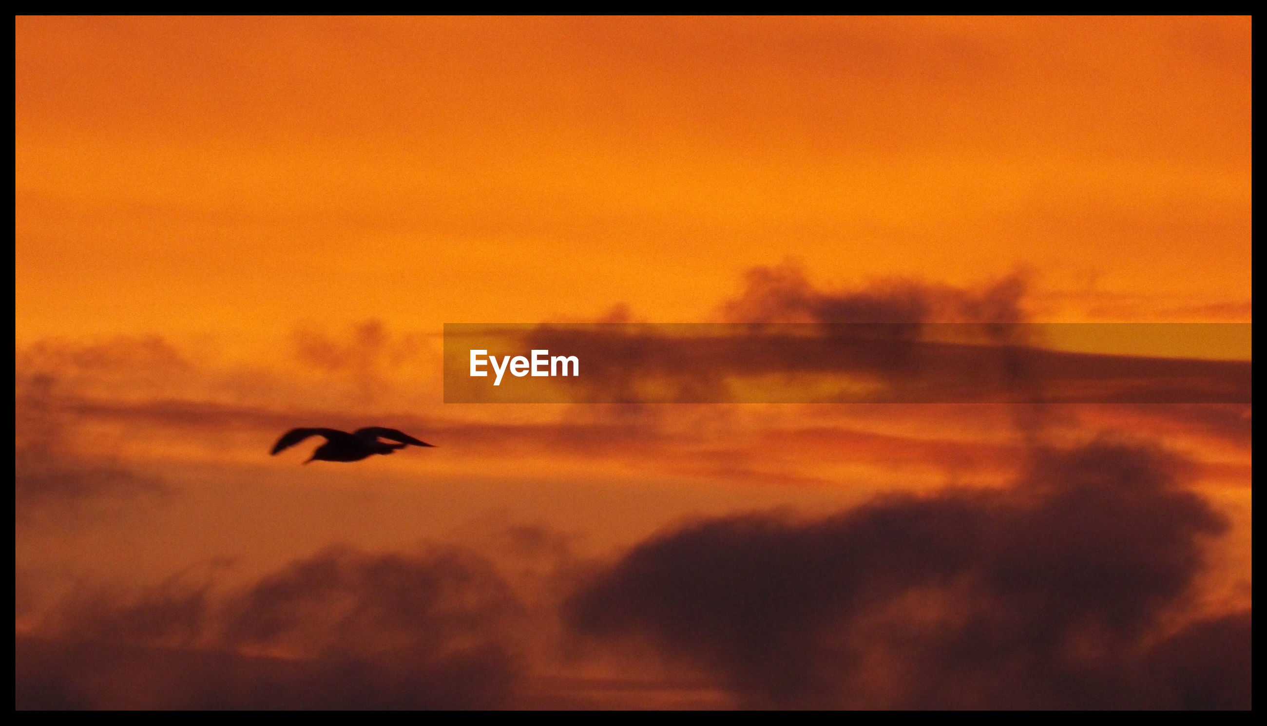 Silhouette seagull flying in orange cloudy sky