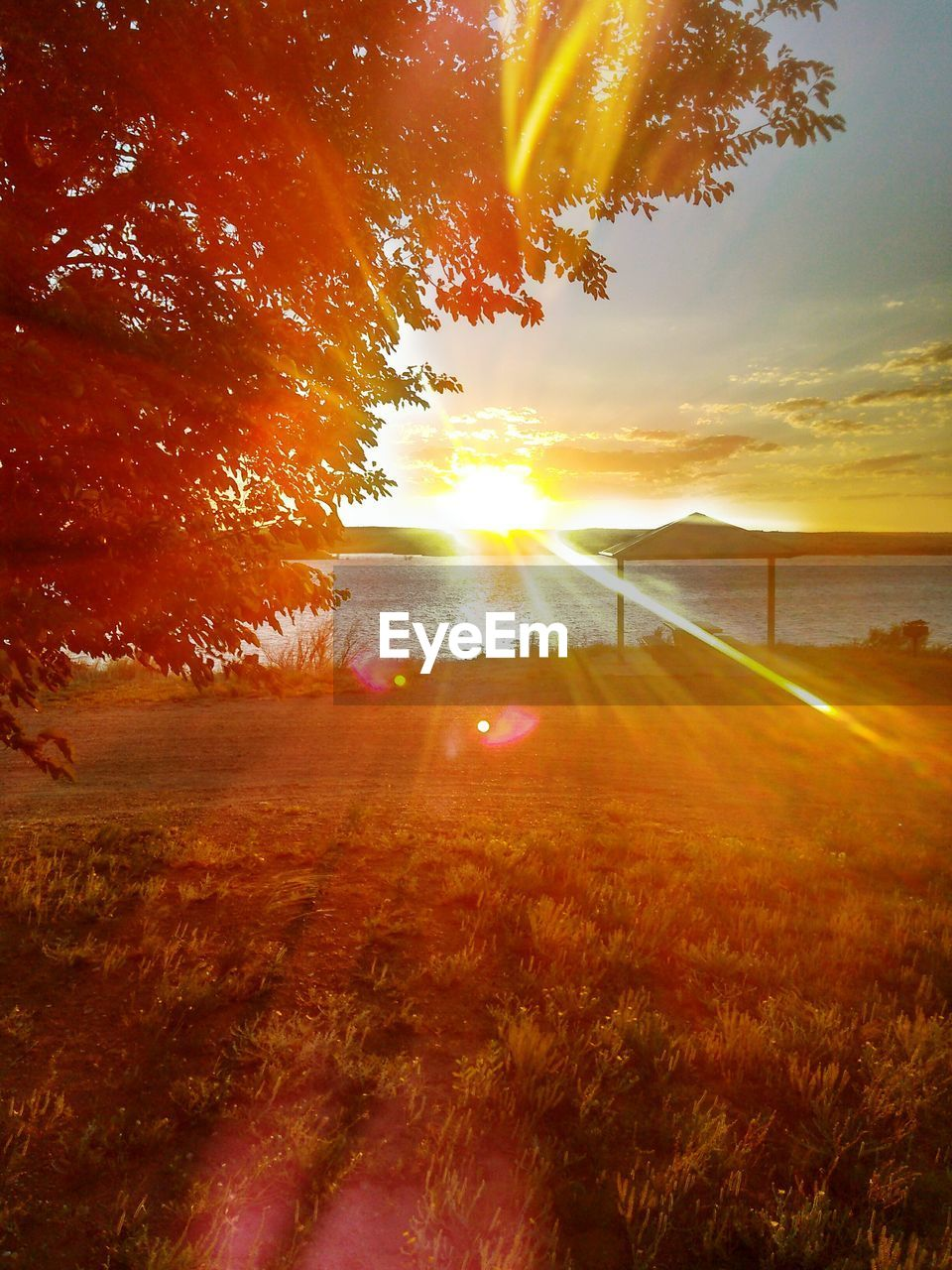 sunbeam, sunset, sun, nature, sunlight, lens flare, beauty in nature, orange color, scenics, tranquil scene, tree, tranquility, no people, outdoors, field, water, landscape, growth, sky, grass, day