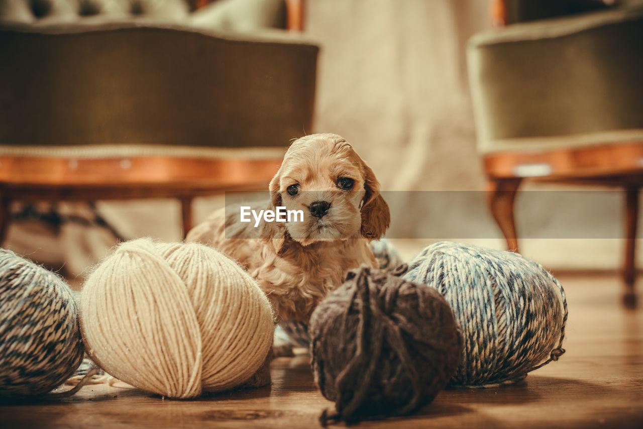 Puppy playing with yarns Love Animal Themes Close-up Cute Day Dog Domestic Animals Indoors  Mammal No People Pets Playing Puppy Spaniel Wool Yarns Yellow
