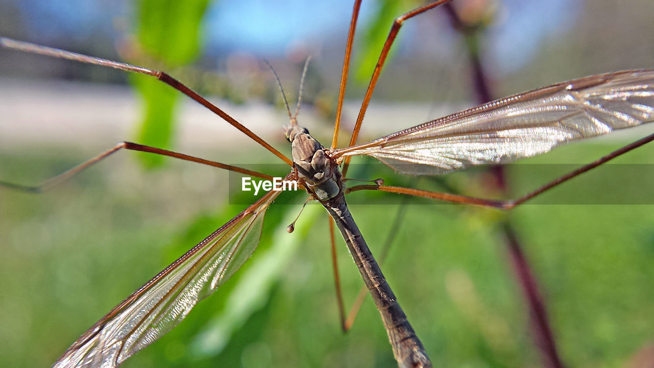 insect, one animal, animal themes, animals in the wild, close-up, nature, no people, day, outdoors, animal wildlife, damselfly