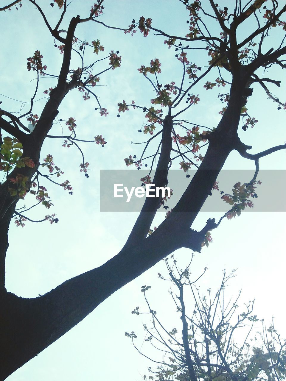 tree, branch, low angle view, nature, growth, beauty in nature, outdoors, day, sky, tranquility, no people, tree trunk, scenics, flower, close-up