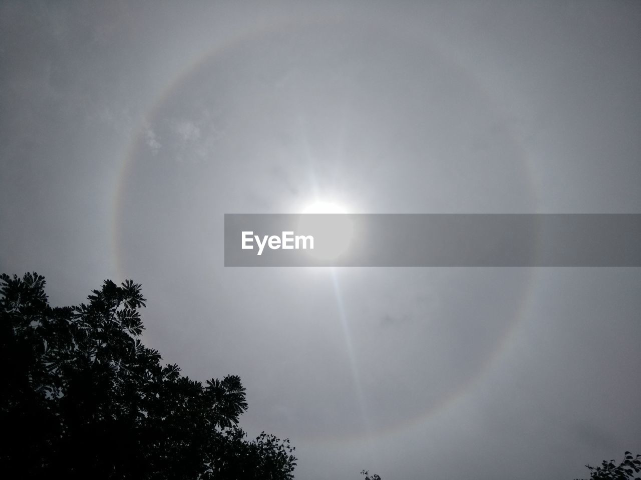 sun, beauty in nature, lens flare, low angle view, nature, halo, scenics, outdoors, no people, sky, tree, tranquility, tranquil scene, sunlight, solar eclipse, moon, natural phenomenon, astronomy, day