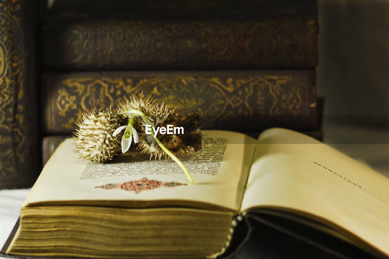 Close-up of flower and spiked fruit on book at home