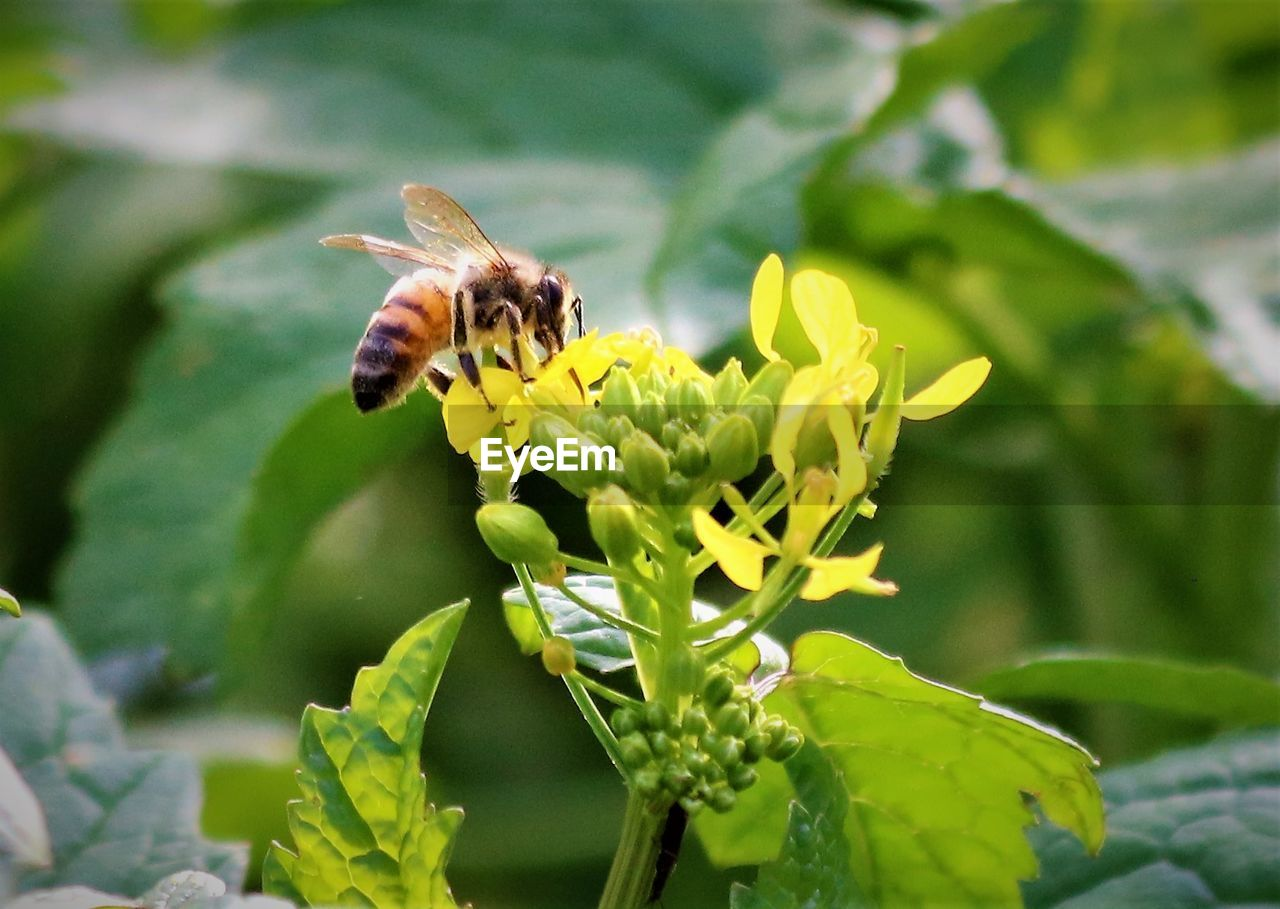 insect, one animal, animals in the wild, flower, animal themes, growth, fragility, plant, nature, freshness, beauty in nature, day, petal, green color, pollination, animal wildlife, outdoors, bee, symbiotic relationship, focus on foreground, no people, leaf, close-up, park - man made space, flower head, blooming, buzzing