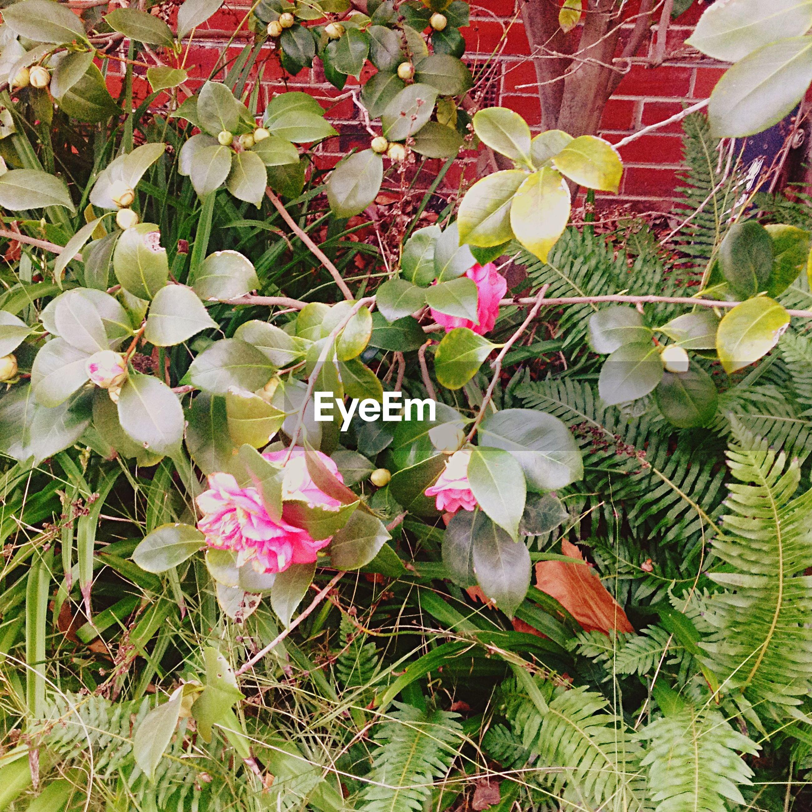 Plants growing outside house in yard