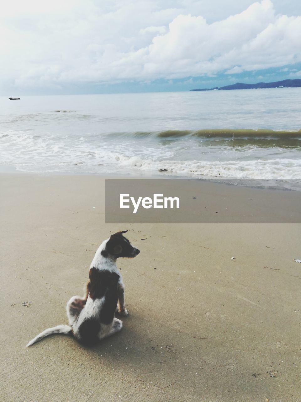 sea, beach, land, one animal, water, animal, animal themes, sky, mammal, horizon over water, canine, dog, domestic, cloud - sky, horizon, pets, domestic animals, vertebrate, sand, no people