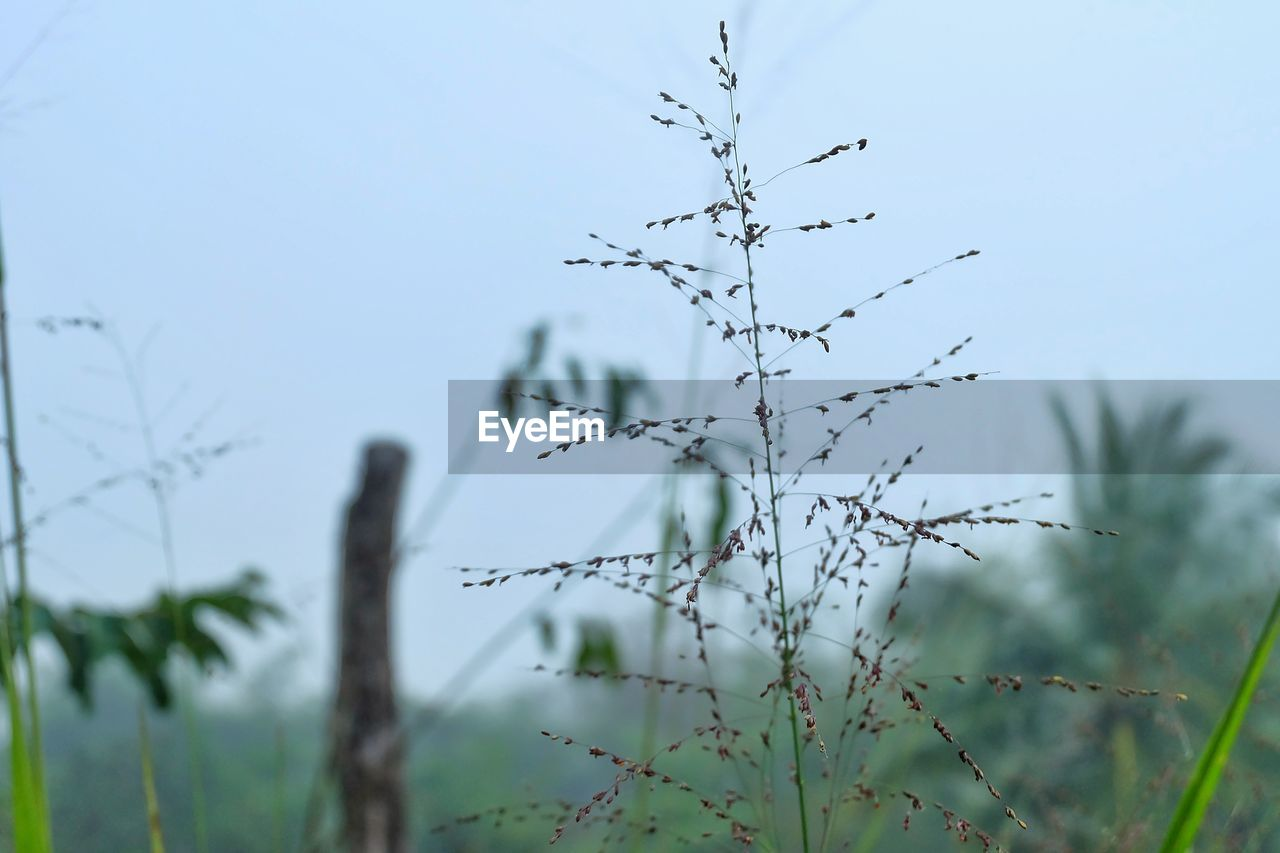 plant, growth, focus on foreground, nature, tree, sky, no people, tranquility, day, beauty in nature, close-up, outdoors, land, selective focus, plant stem, low angle view, clear sky, field, twig, tranquil scene
