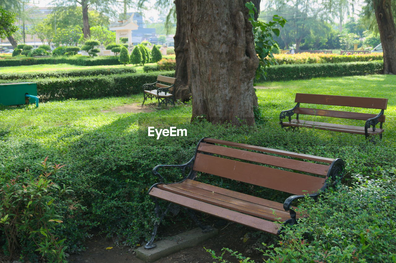 bench, tree, grass, empty, absence, growth, tree trunk, nature, no people, chair, seat, green color, day, landscape, field, tranquility, park - man made space, outdoors, beauty in nature