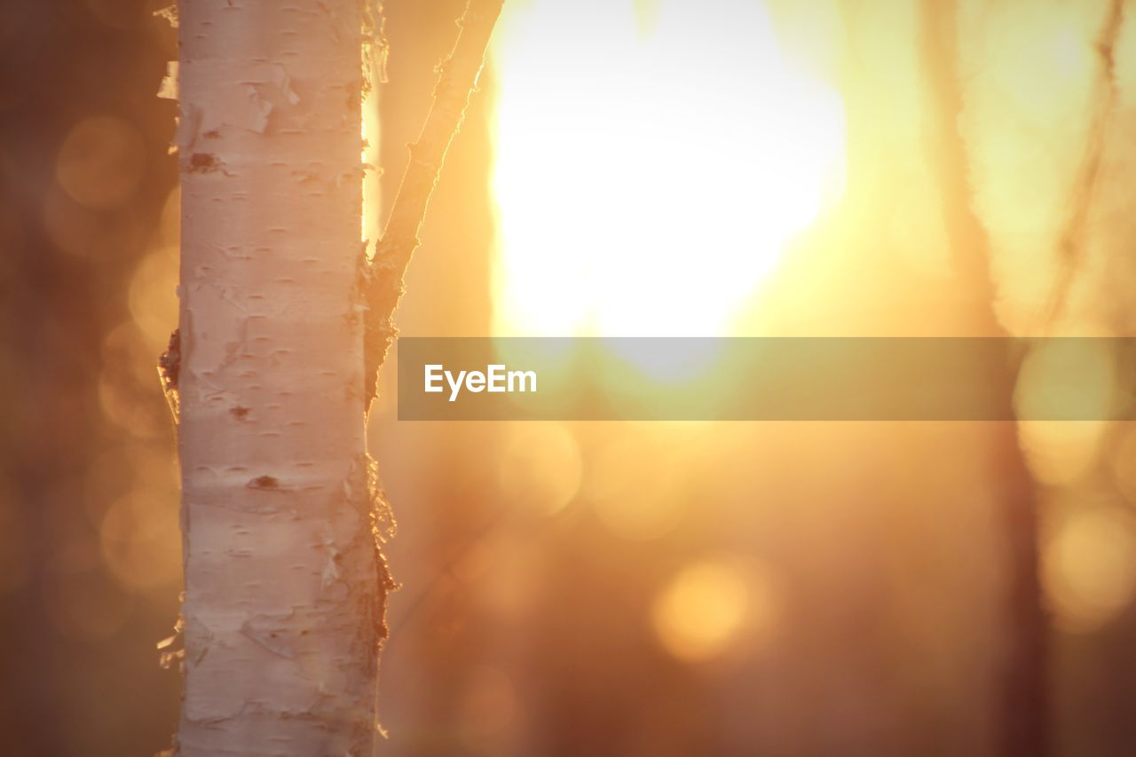 sky, sunset, nature, close-up, tree trunk, tree, sunlight, trunk, no people, sun, beauty in nature, focus on foreground, outdoors, selective focus, lens flare, orange color, plant, tranquility, day, growth