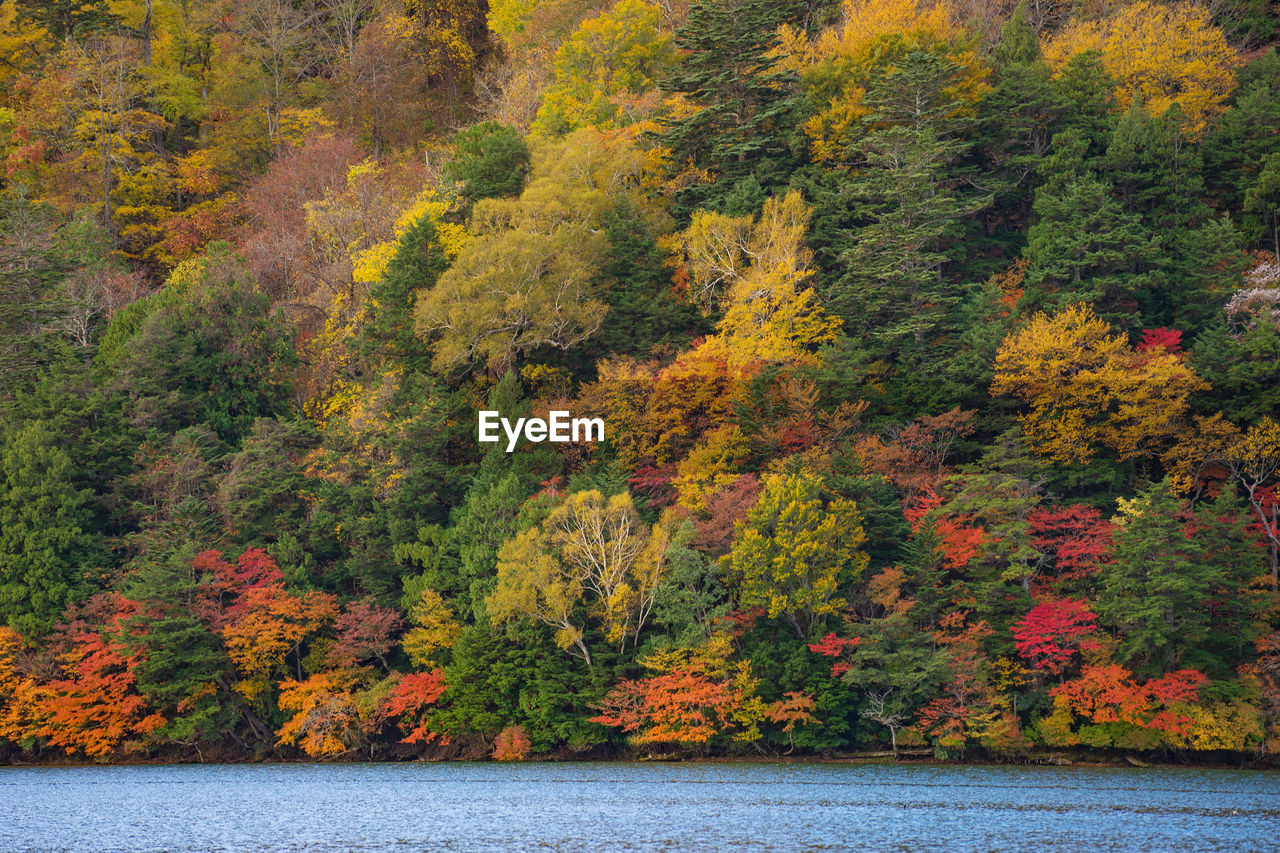 autumn, tree, nature, forest, leaf, scenics, beauty in nature, change, outdoors, no people, lake, day, water, yellow, growth, mountain