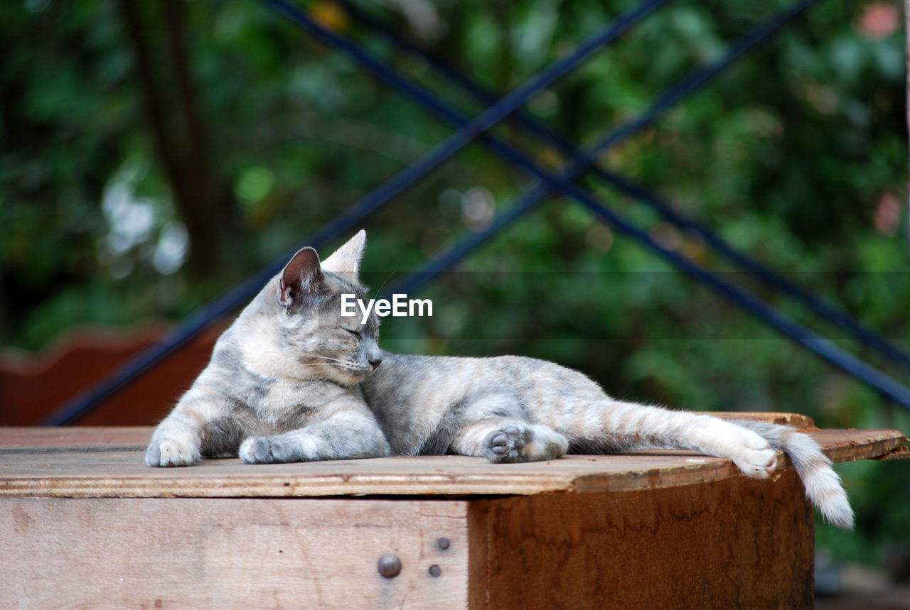 animal, animal themes, mammal, one animal, wood - material, vertebrate, focus on foreground, day, no people, tree, animal wildlife, relaxation, nature, plant, animals in the wild, fence, barrier, outdoors, cat, feline