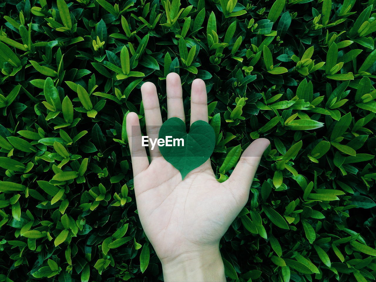 Cropped Image Of Hand Holding Leaf Against Plant