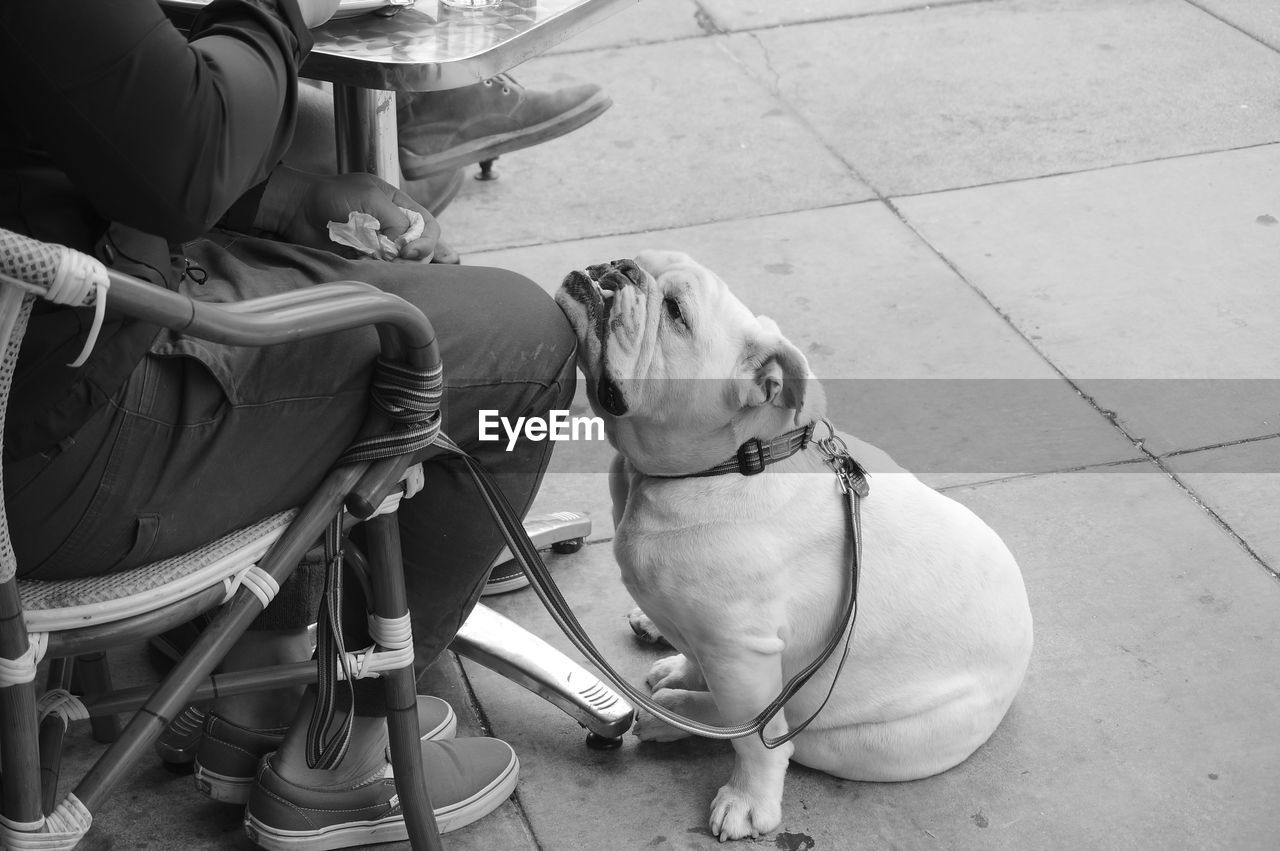 Dog leaning on leg of man sitting on sidewalk cafe