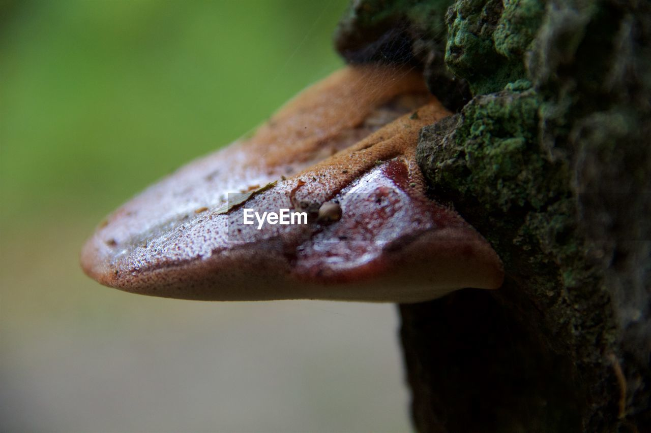 close-up, selective focus, focus on foreground, plant, nature, animals in the wild, one animal, day, animal themes, one person, animal wildlife, animal, human body part, tree trunk, outdoors, trunk, body part, growth, real people