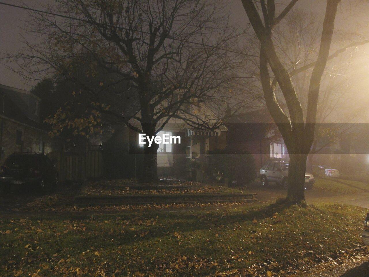 tree, night, bare tree, outdoors, no people, nature, branch, illuminated, building exterior, sky