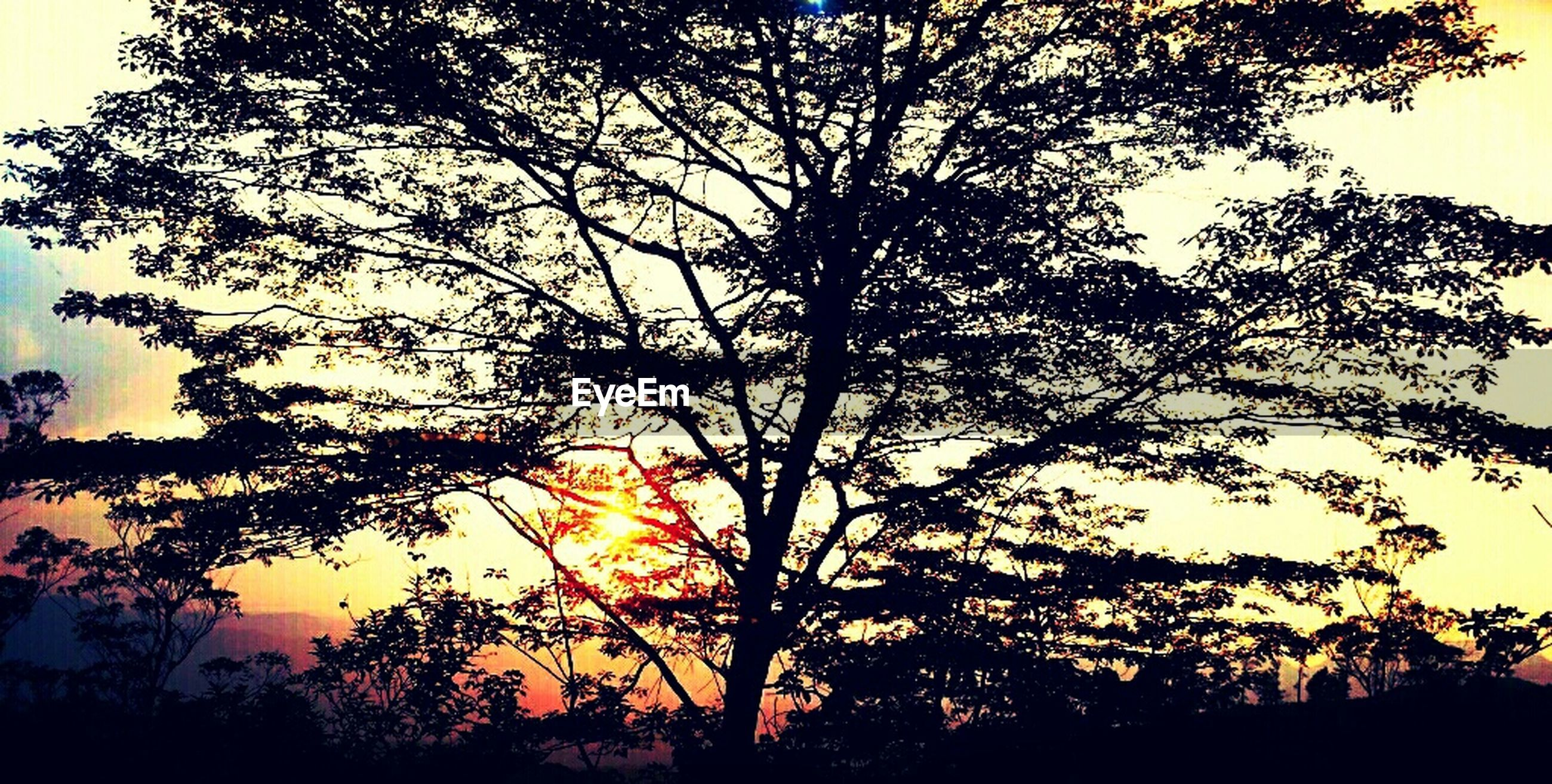 silhouette, sunset, tree, tranquility, beauty in nature, scenics, tranquil scene, sky, branch, nature, growth, low angle view, orange color, idyllic, sun, outdoors, no people, outline, sunlight, back lit