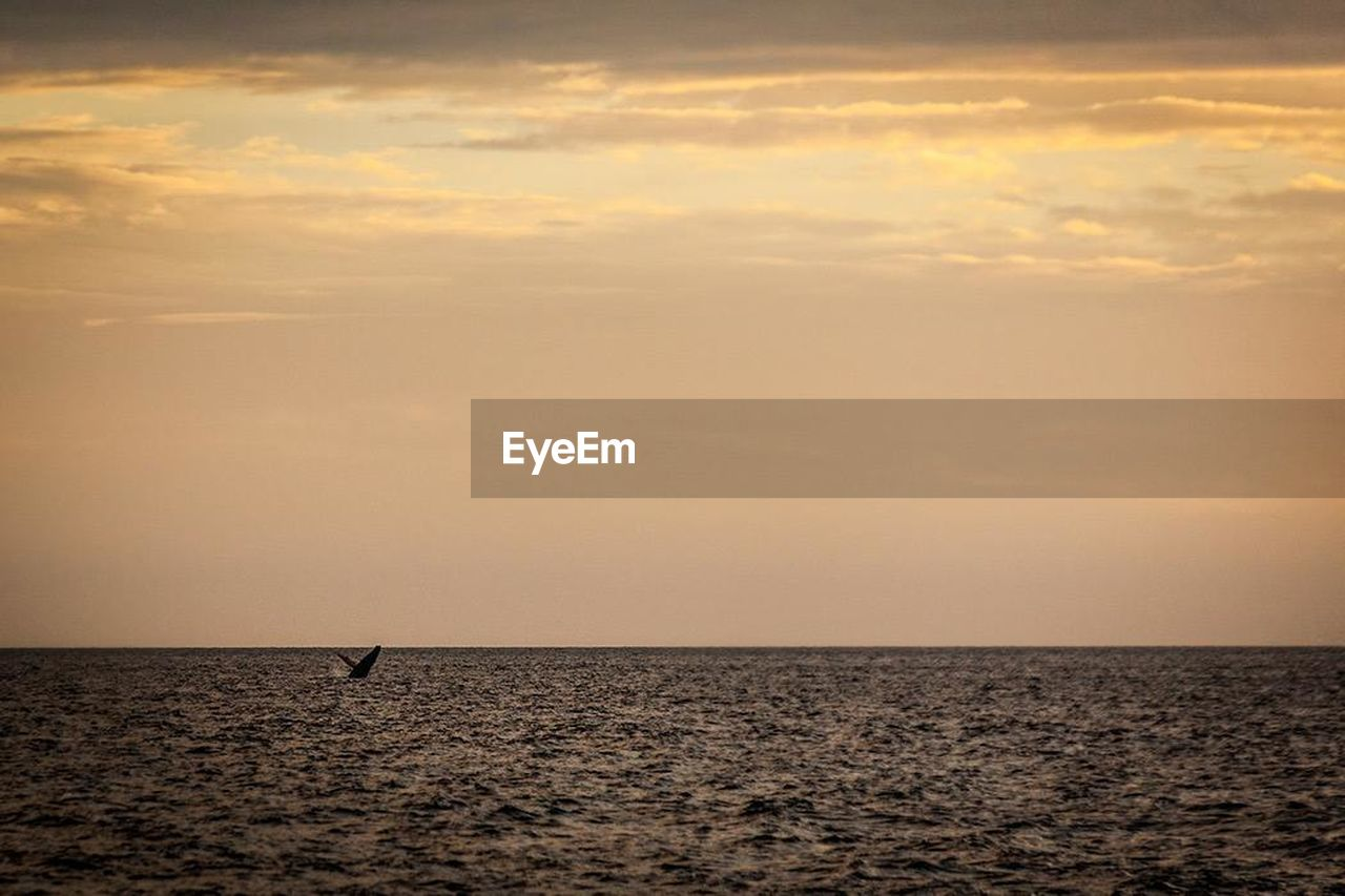 sunset, sea, beauty in nature, nature, water, scenics, no people, sky, animals in the wild, horizon over water, tranquil scene, tranquility, silhouette, cloud - sky, animal themes, animal wildlife, one animal, bird, outdoors, day, mammal