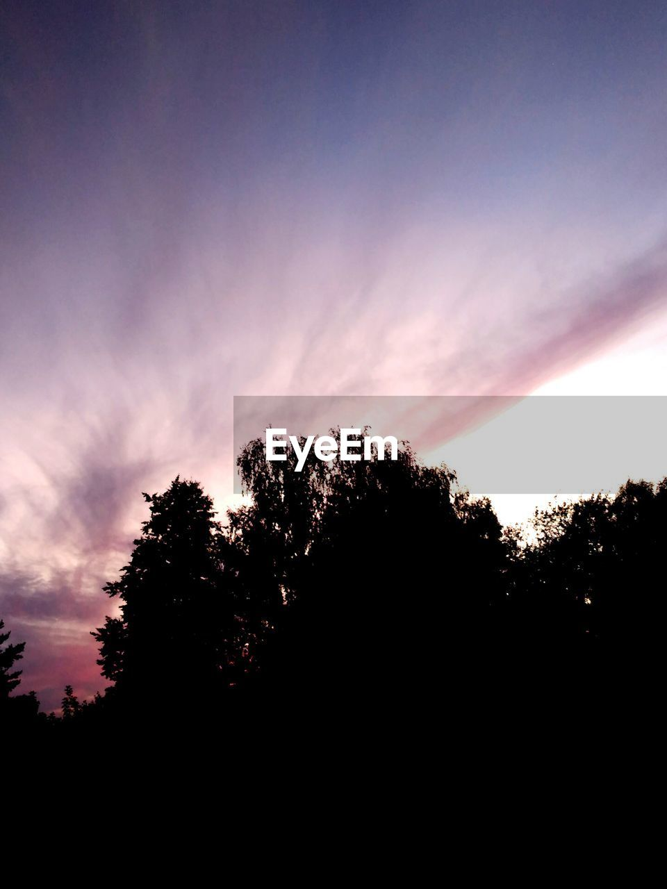 tree, silhouette, nature, beauty in nature, sky, scenics, tranquility, tranquil scene, sunset, no people, growth, outdoors, low angle view, landscape, day, scenery