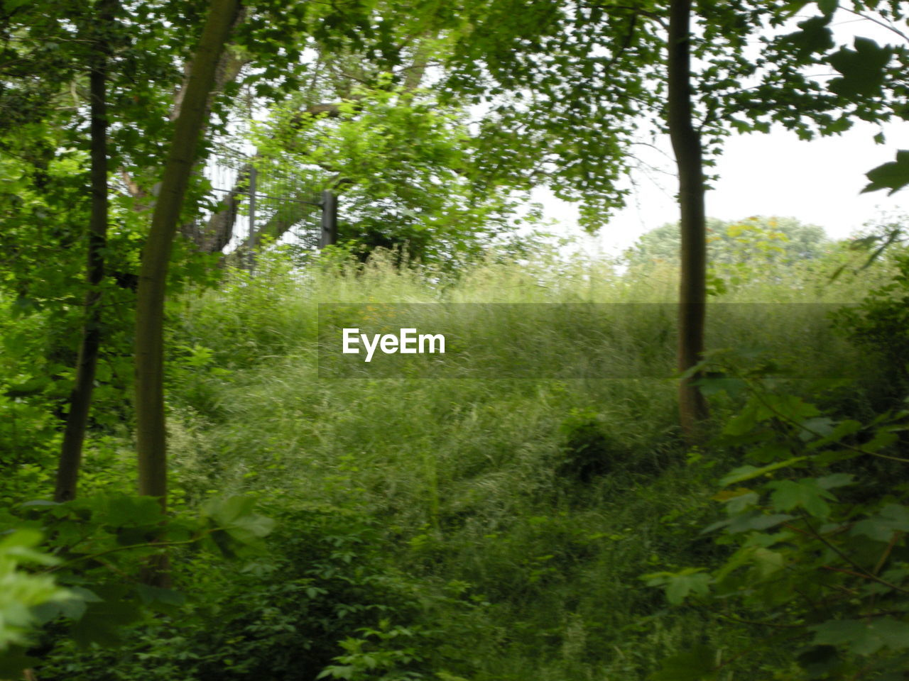 nature, grass, forest, growth, plant, tree, no people, day, outdoors