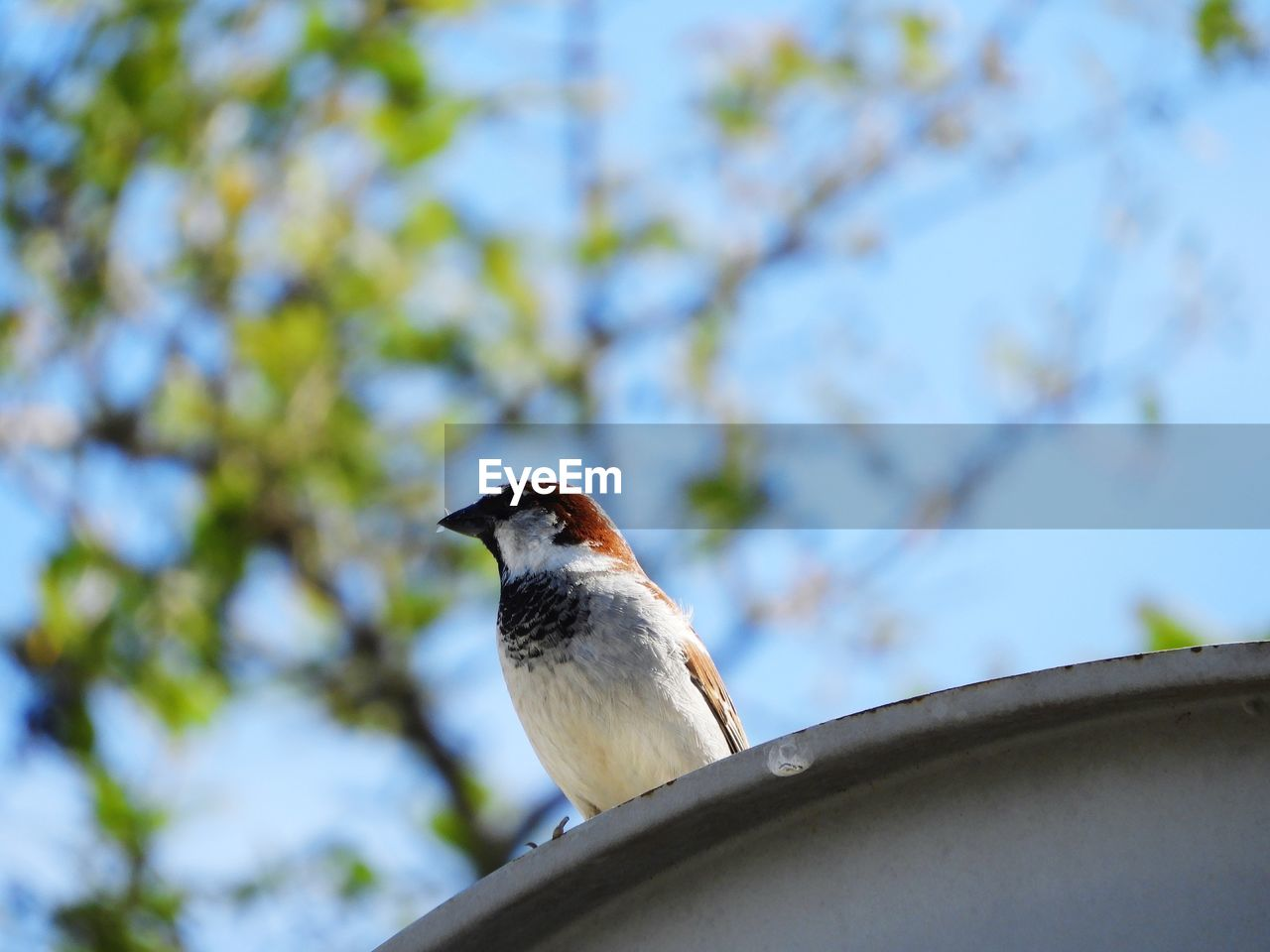 one animal, animals in the wild, bird, low angle view, animal themes, animal wildlife, focus on foreground, day, perching, nature, outdoors, no people, tree, close-up, branch, beauty in nature, sparrow, sky