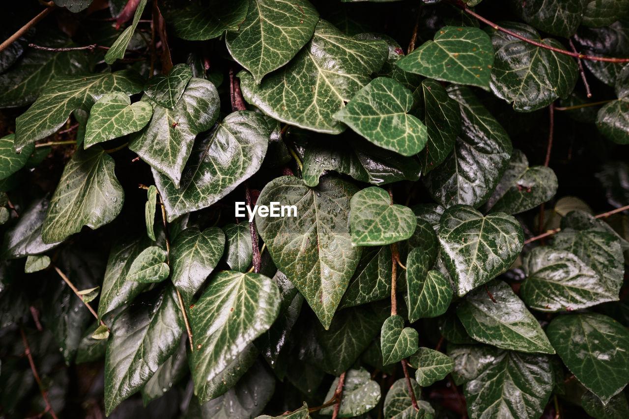 Full Frame Shot Of Plants During Rainy Season