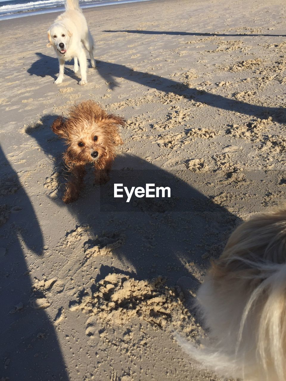 mammal, animal themes, canine, dog, animal, domestic, pets, domestic animals, one animal, vertebrate, sunlight, shadow, nature, day, land, looking at camera, portrait, sand, high angle view, no people, outdoors, animal head