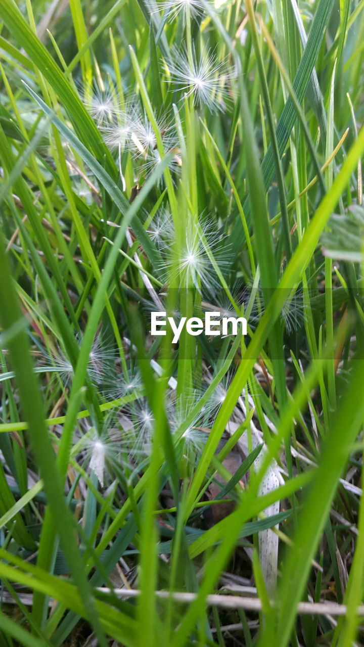 growth, plant, nature, green color, grass, beauty in nature, field, close-up, full frame, outdoors, fragility, no people, day, freshness