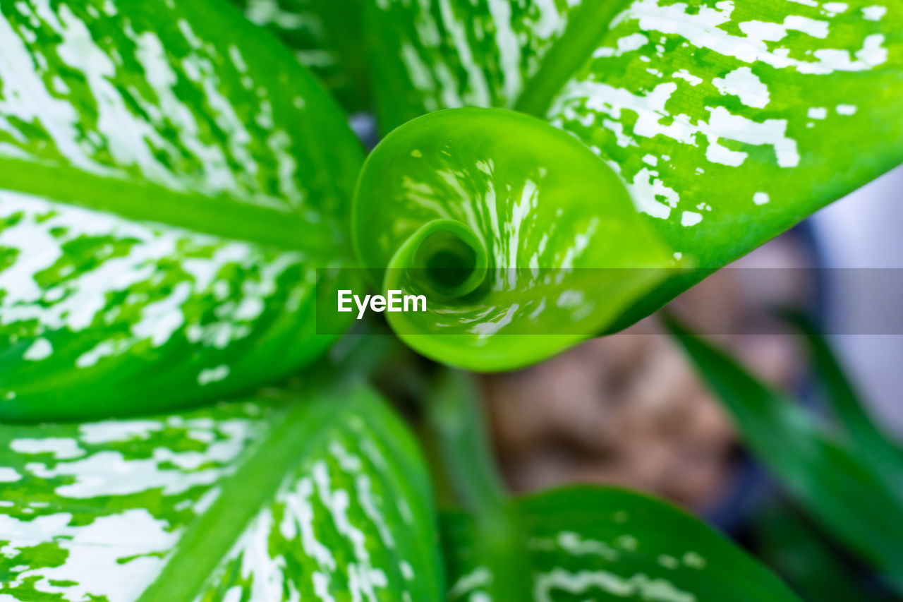 green color, close-up, plant, growth, no people, freshness, beauty in nature, nature, day, focus on foreground, leaf, plant part, outdoors, selective focus, food, food and drink, high angle view, vegetable, full frame, natural pattern