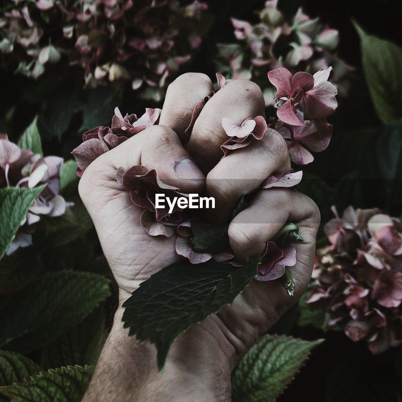 Cropped hand of man crushing hydrangeas