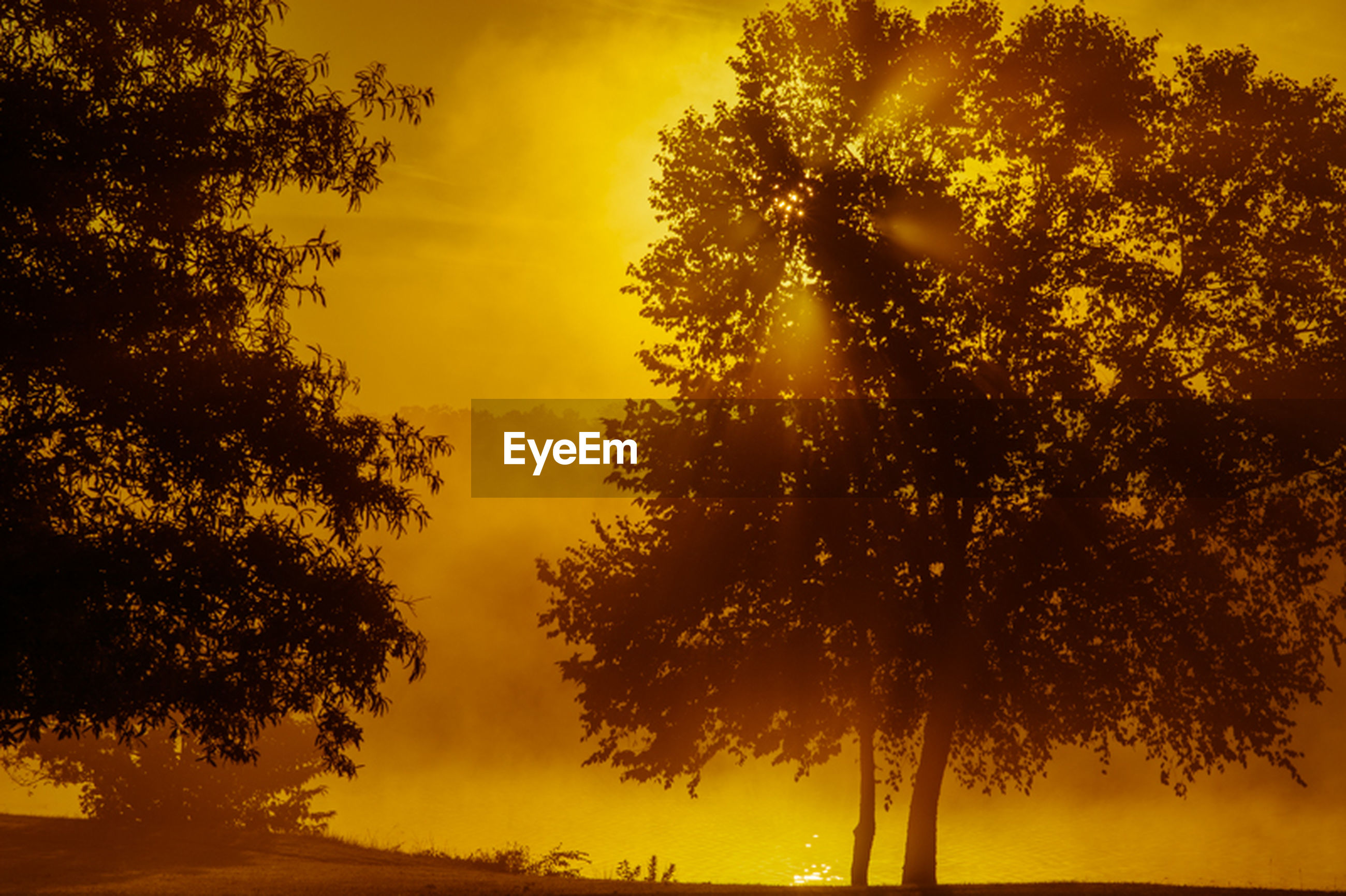 sunset, tree, orange color, silhouette, tranquility, beauty in nature, tranquil scene, scenics, nature, sky, growth, idyllic, branch, yellow, tree trunk, sun, outdoors, no people, non-urban scene, sunlight