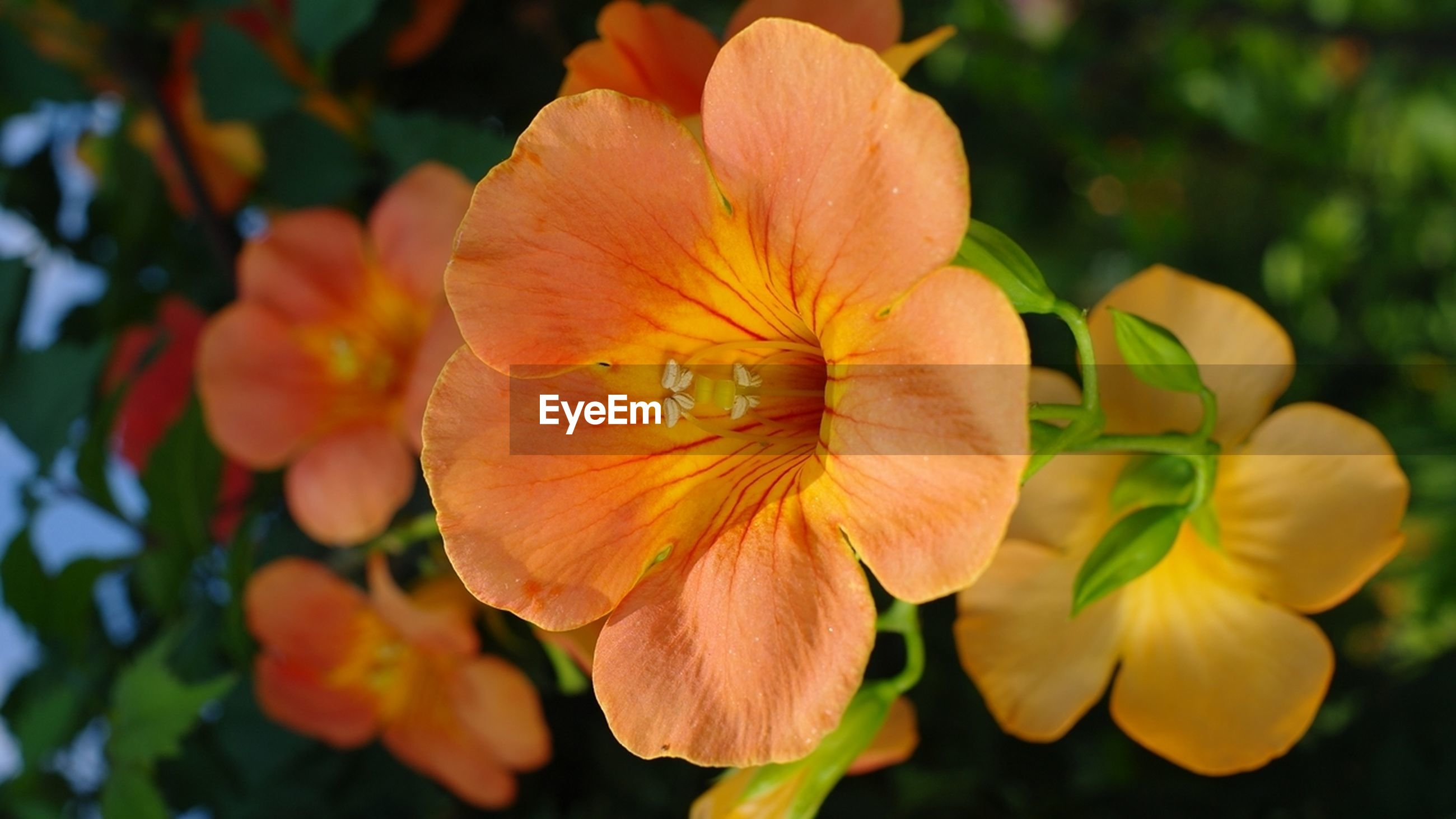 flower, petal, freshness, fragility, flower head, growth, beauty in nature, close-up, focus on foreground, blooming, nature, orange color, plant, stamen, single flower, in bloom, park - man made space, pollen, outdoors, day