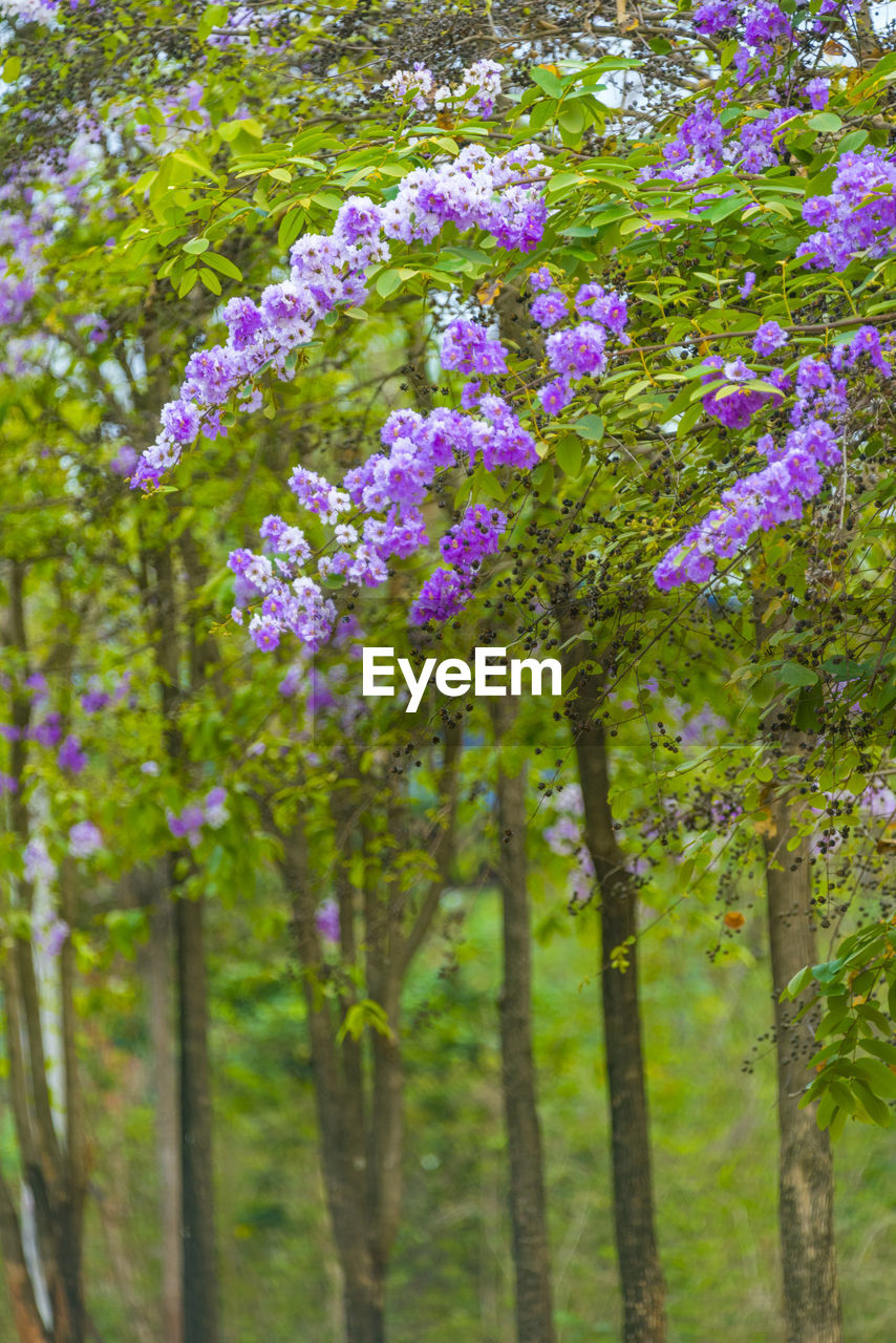flowering plant, flower, plant, beauty in nature, fragility, vulnerability, growth, freshness, tree, day, nature, no people, close-up, land, focus on foreground, outdoors, purple, selective focus, green color, inflorescence, springtime, flower head
