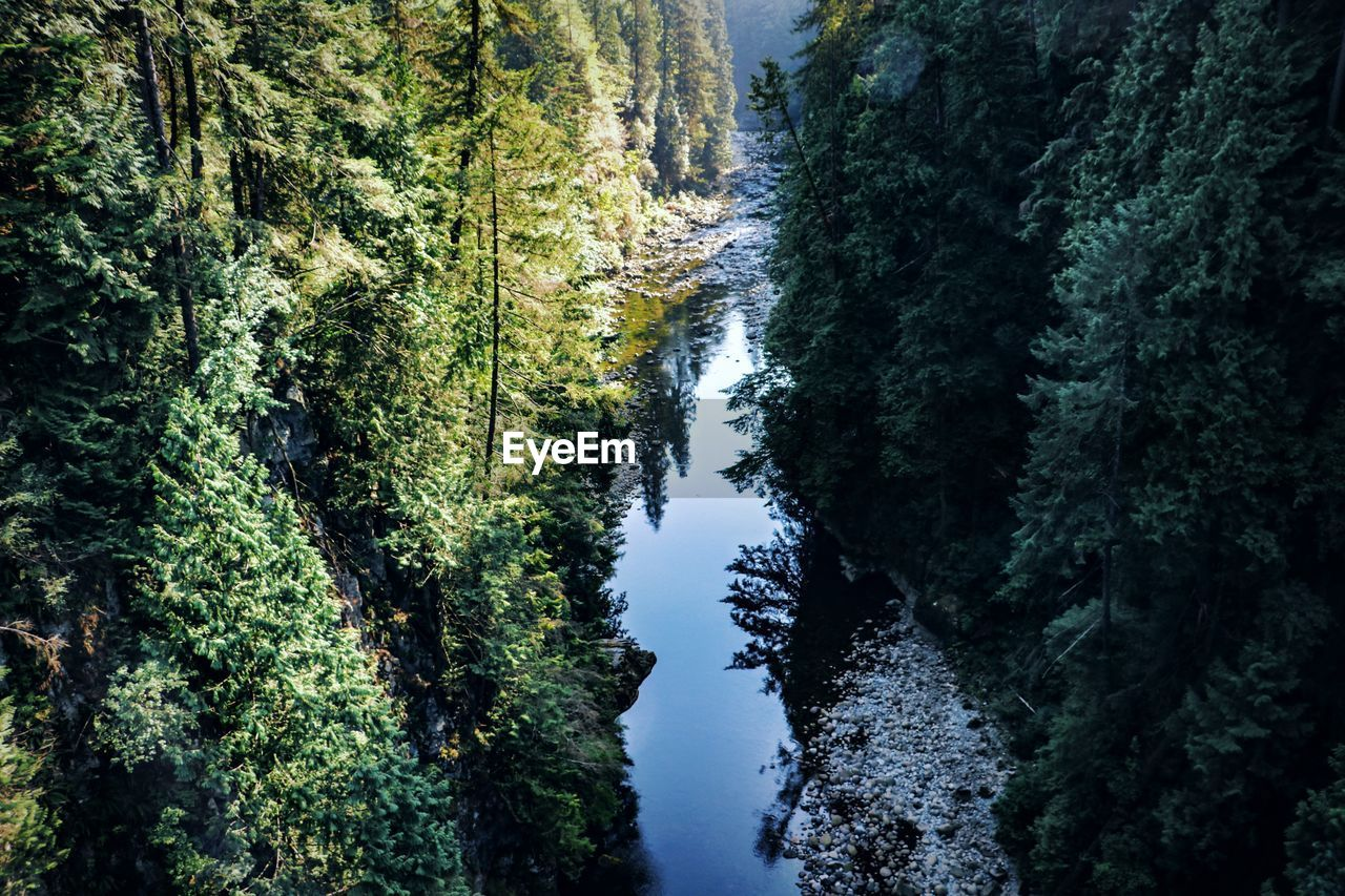 tree, plant, beauty in nature, scenics - nature, growth, tranquility, forest, tranquil scene, green color, no people, nature, land, water, non-urban scene, day, idyllic, outdoors, lush foliage, high angle view, woodland, flowing water, evergreen tree