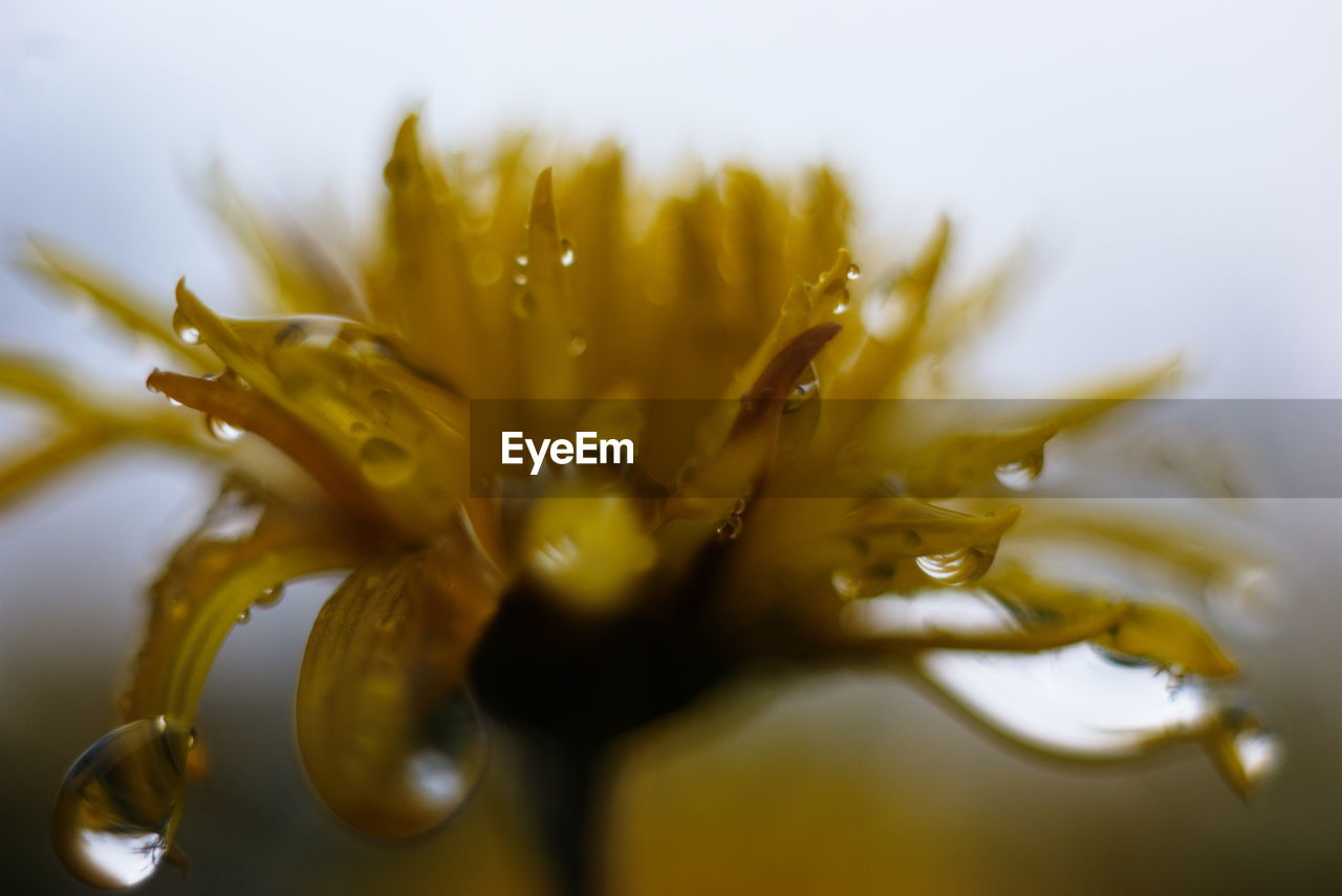 CLOSE-UP OF WATER DROPS ON FLOWERS