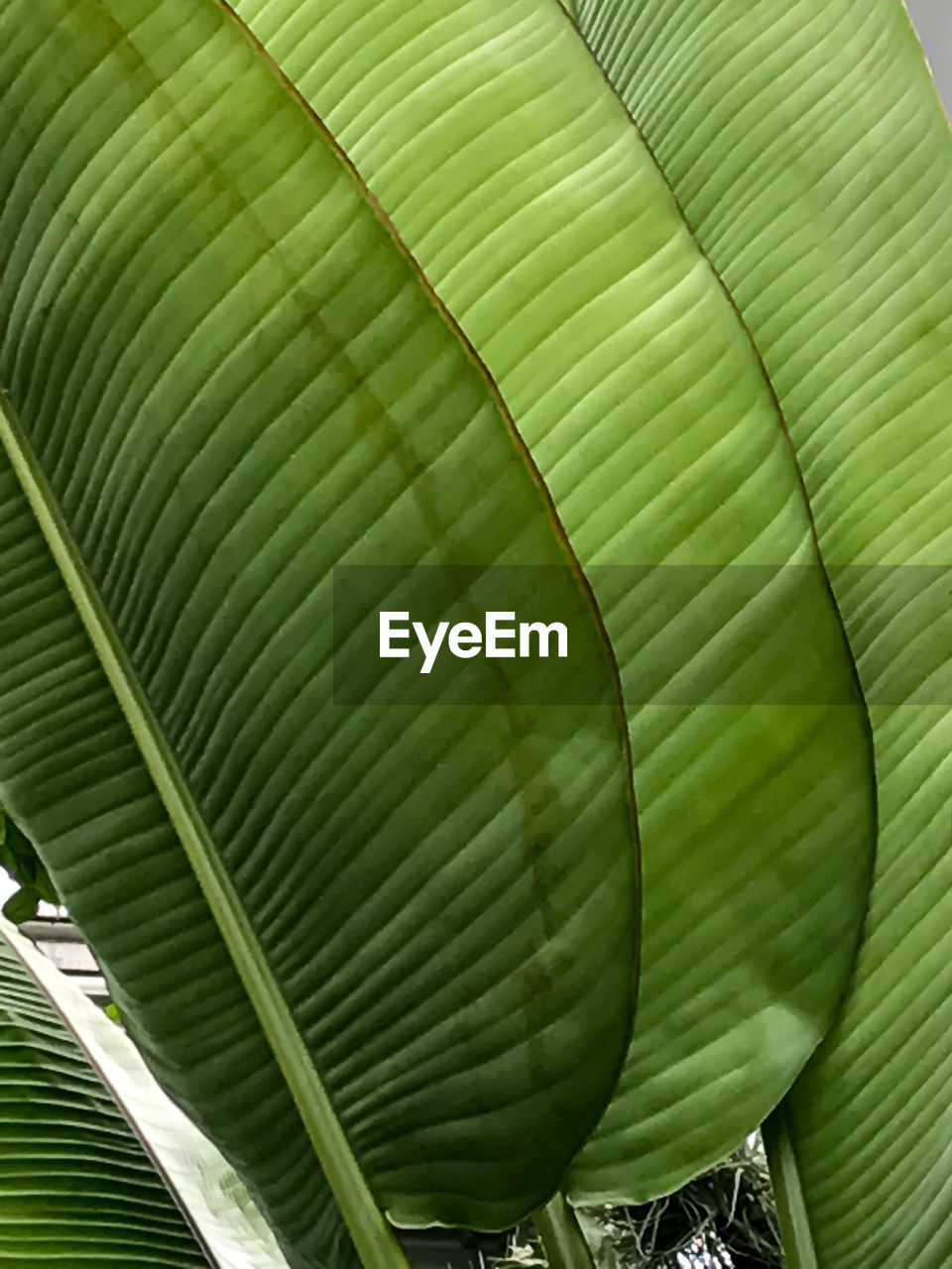 green color, leaf, banana leaf, banana tree, growth, no people, day, nature, textured, backgrounds, tree, outdoors, close-up, palm tree, beauty in nature, freshness